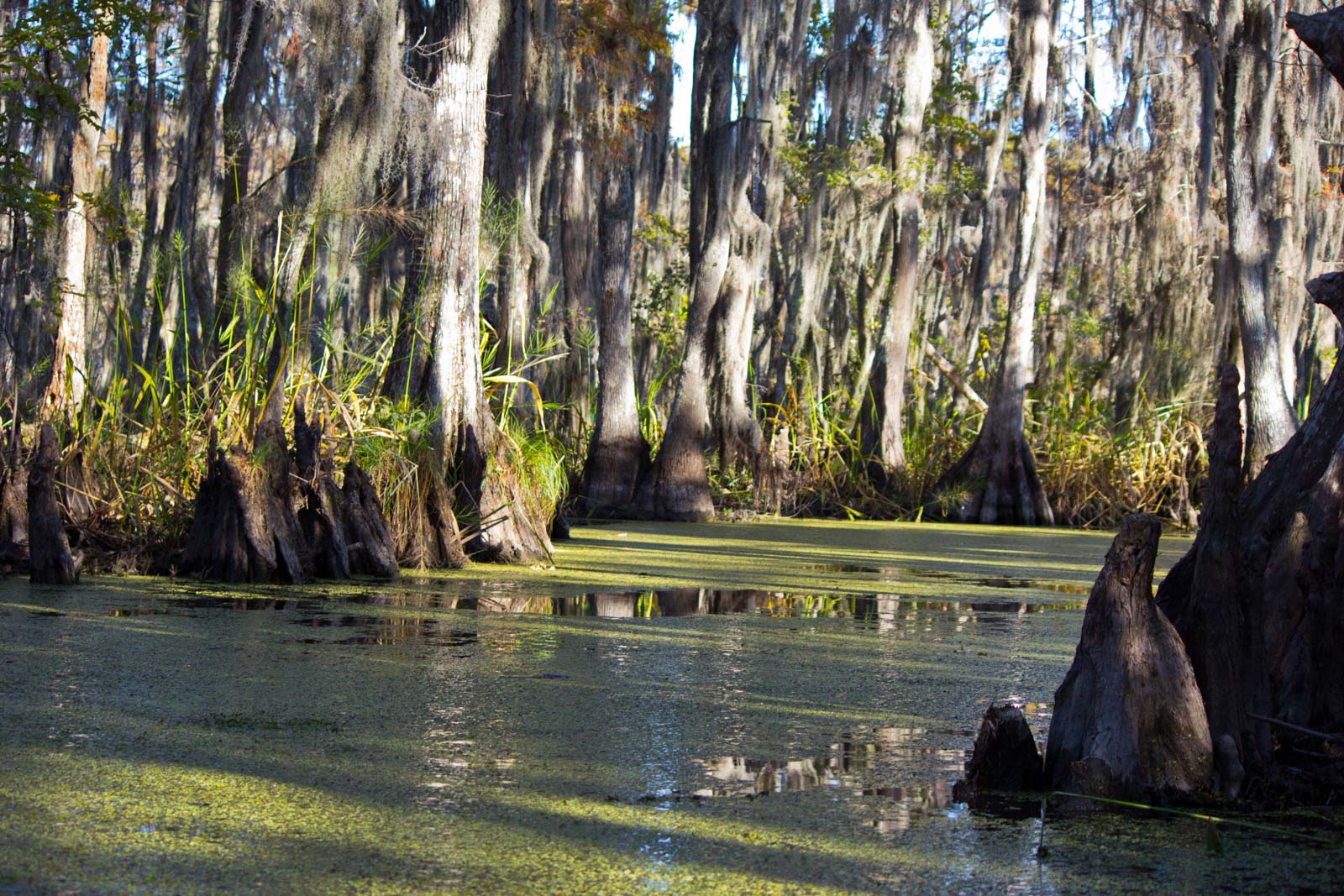 New Orleans Swamp Tour, Louisiana, USA