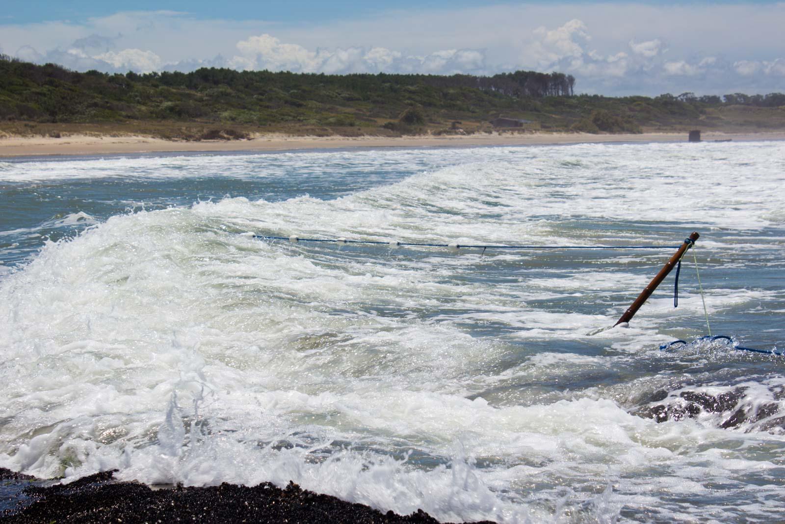 Karumbe turtle conservation in Uruguay, Volunteering in Uruguay