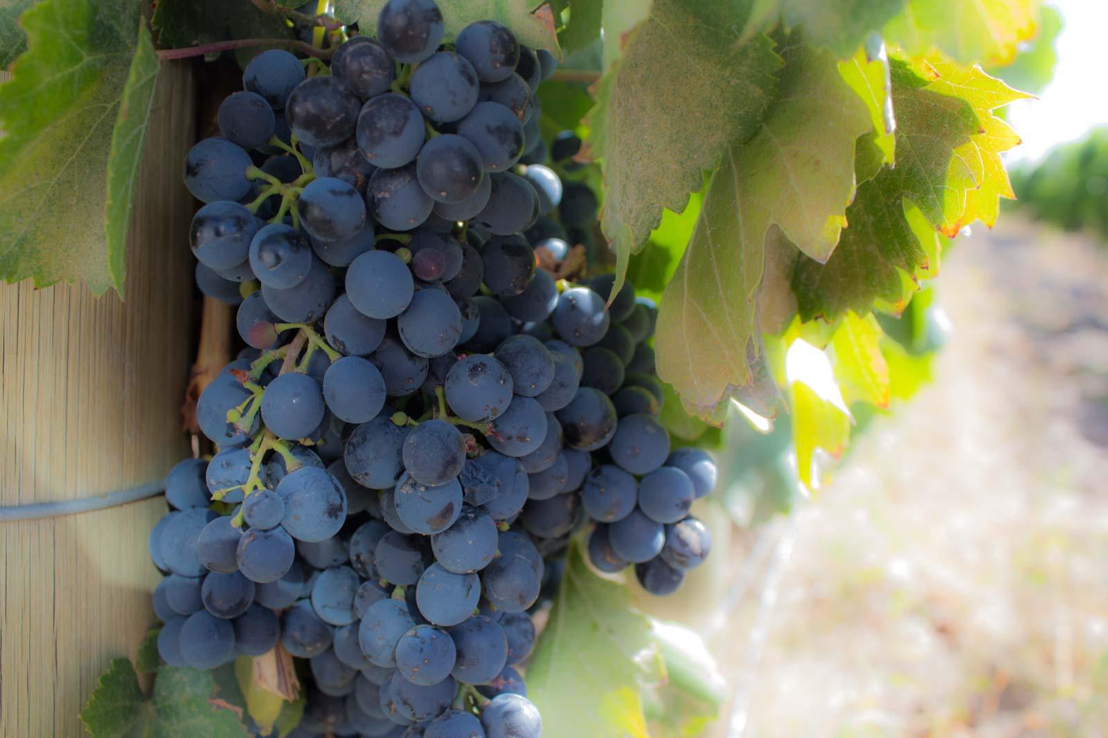 mendoza, wine argentina, malbec, carmenere