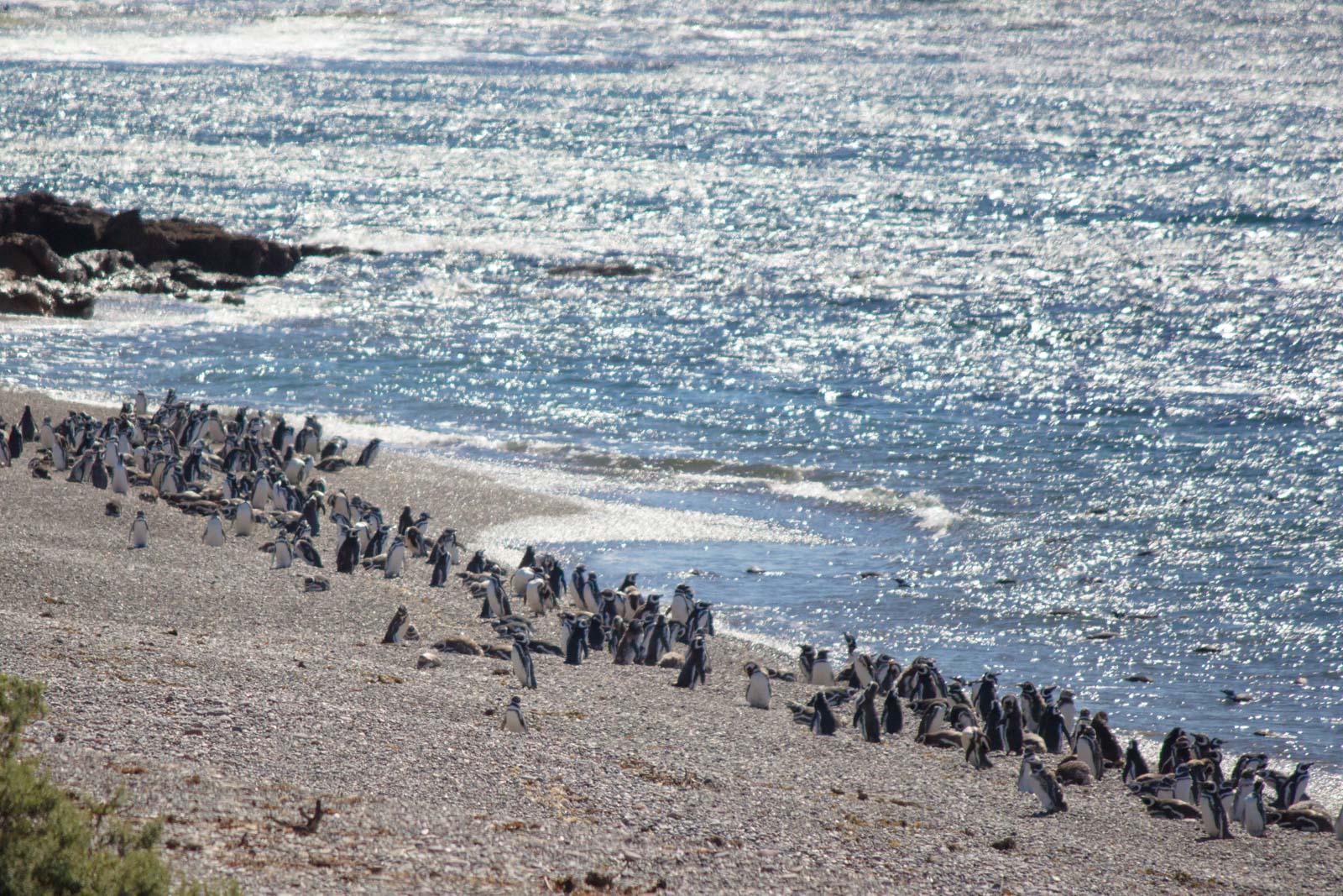 Punta Tombo, Puerto Madryn, Patagonia, Argentina