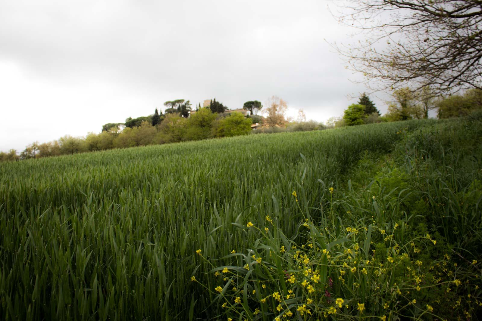 Agritourism in Umbria, Italy