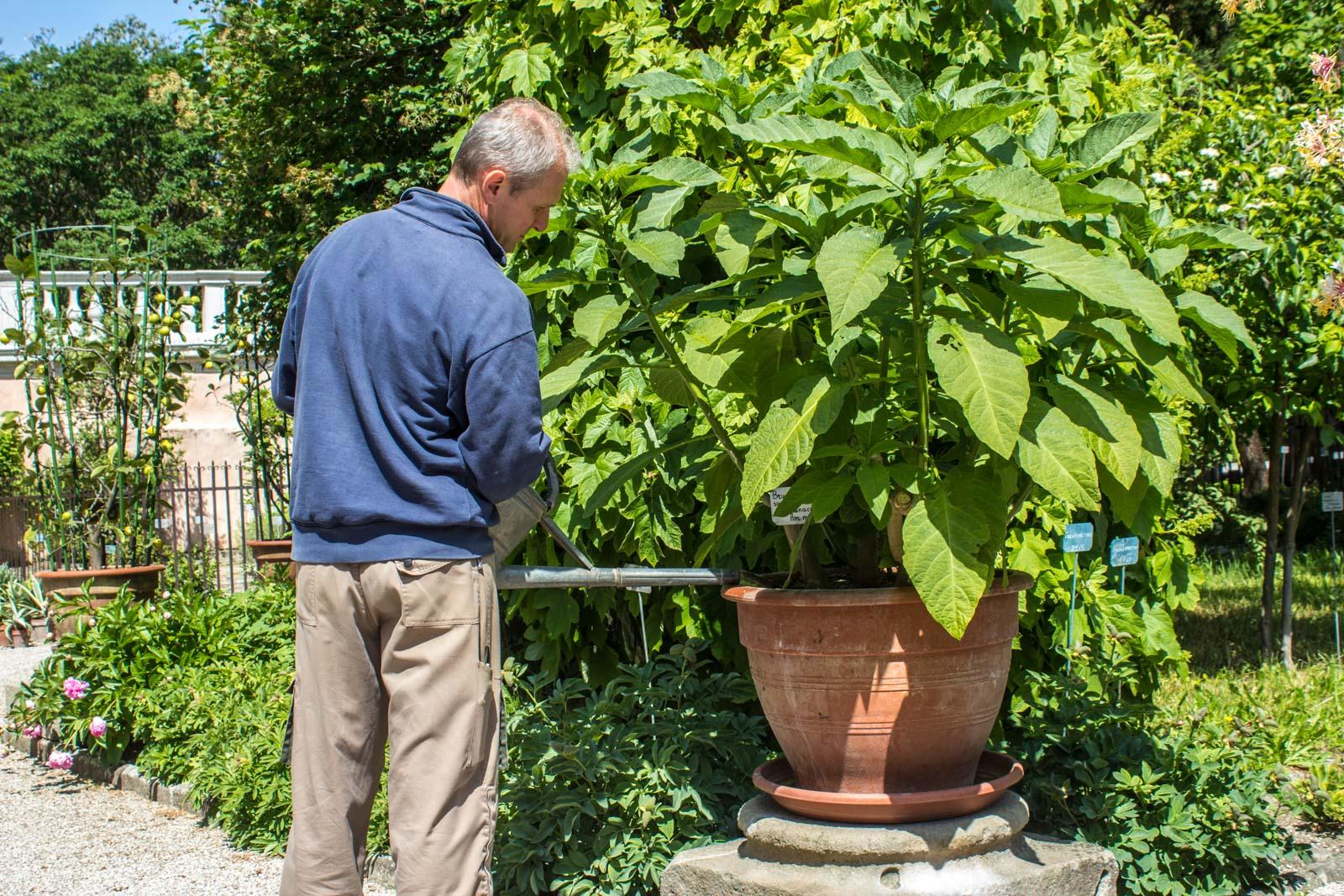 Padua Botanic Garden, Italy