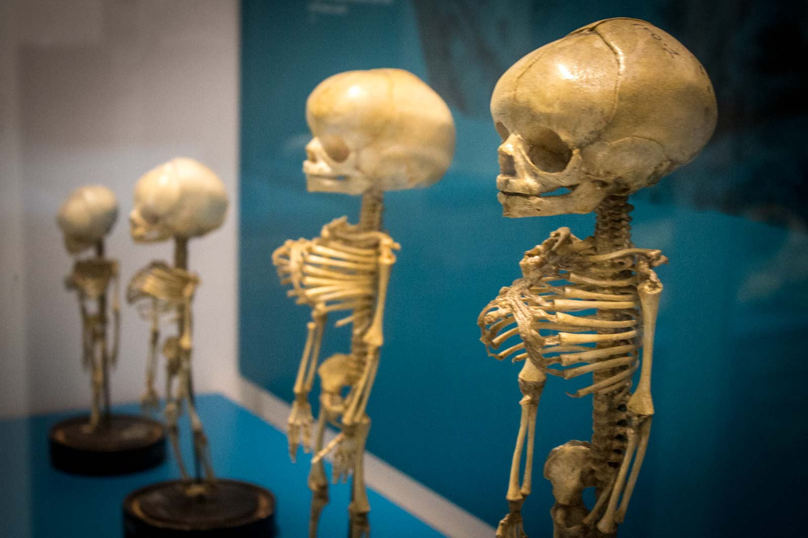 The National Museum of Health and Medicine – Washington, D.C.