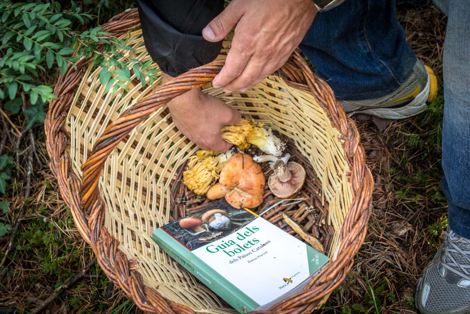 mushroom hunting in the pyrenees in Spain