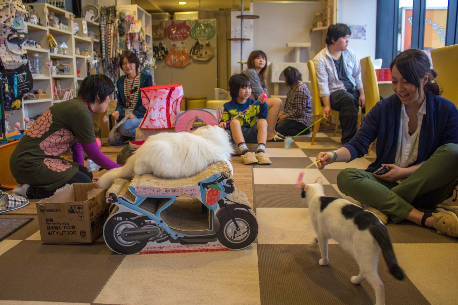 tokyo cat cafe, cats in japan, weird japanese cafe, tokyo