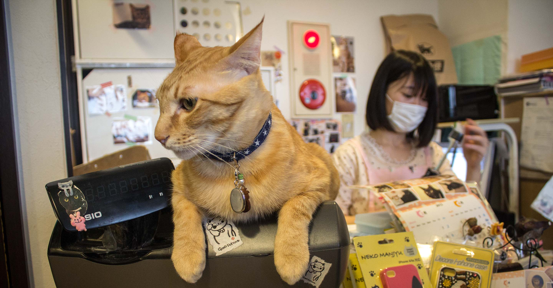 Tokyo Cat Cafe Weird Cafes In Japan