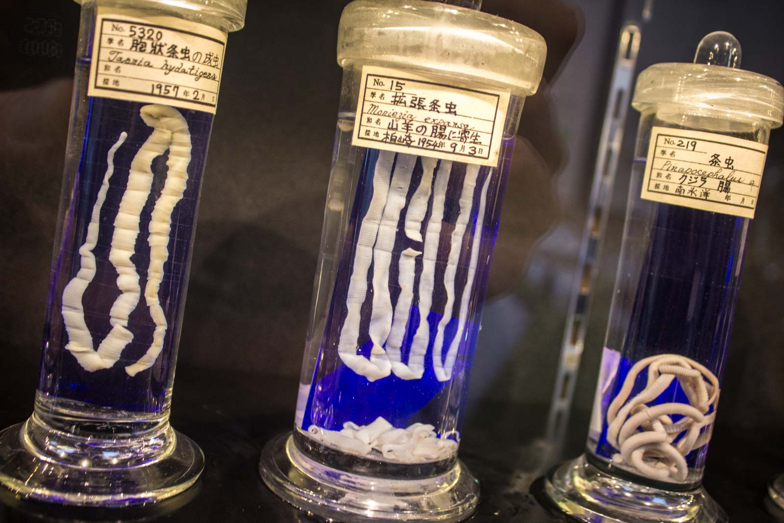 Meguro Parasitological Museum. Travel Writers' Guide: 50+ Best Science Museums Around the World.