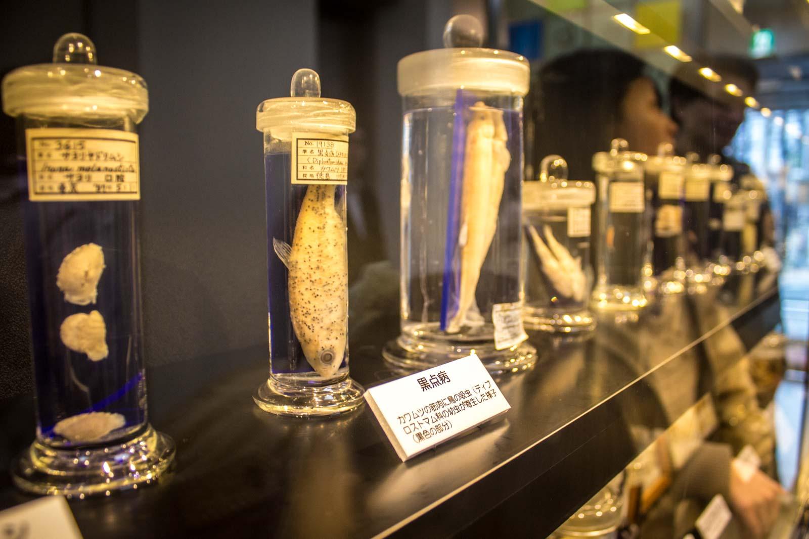 Meguro Parasitological Museum, Tokyo, Japan