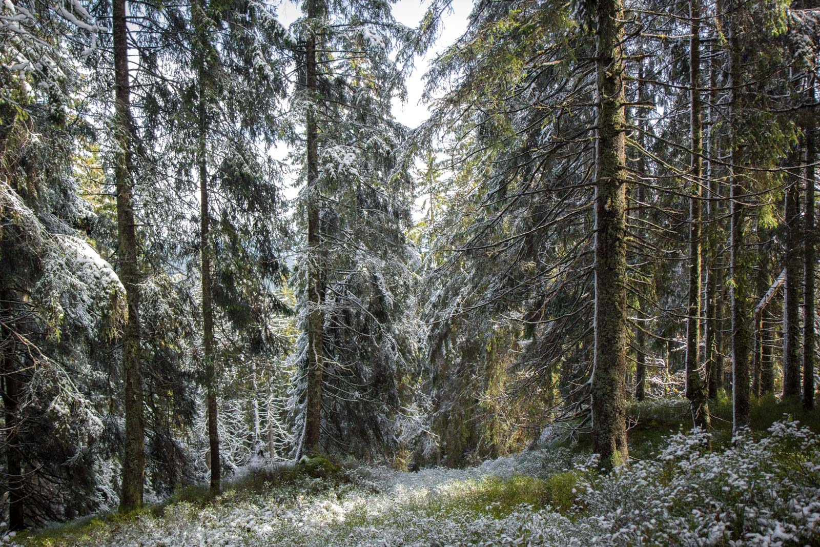 Black Forest, Feldberg, Germany