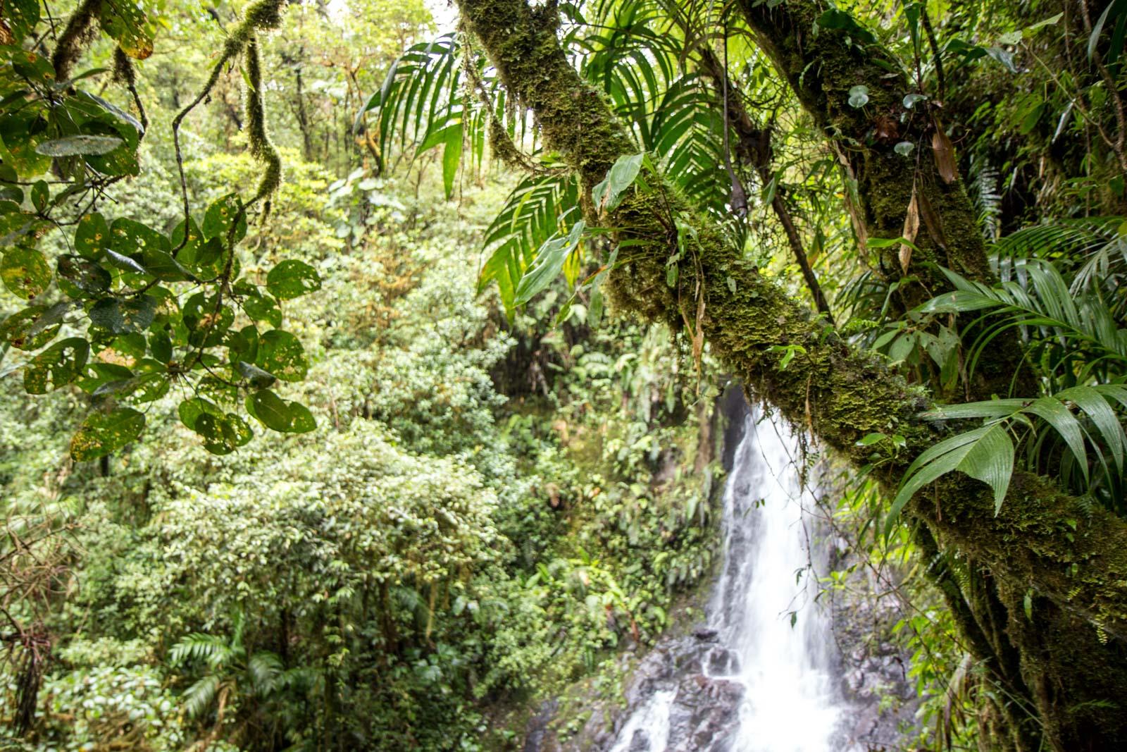 El Silencio Ecolodge, Costa Rica