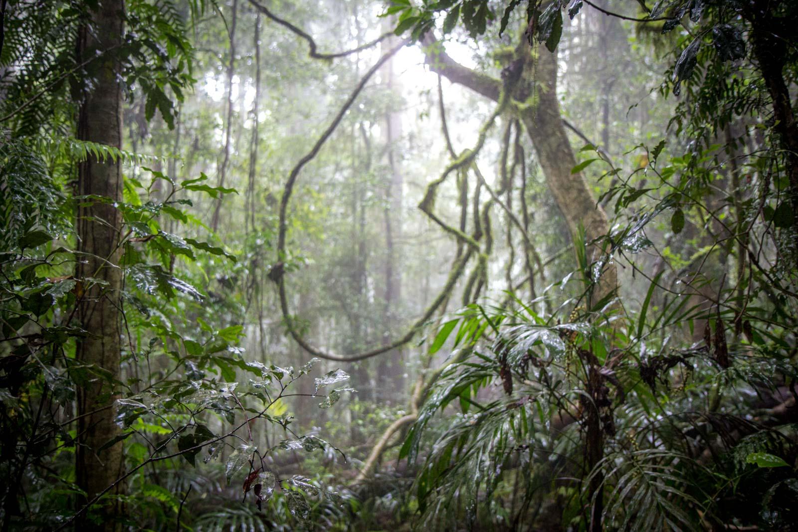 Dorrigo National Park, NSW, Australia
