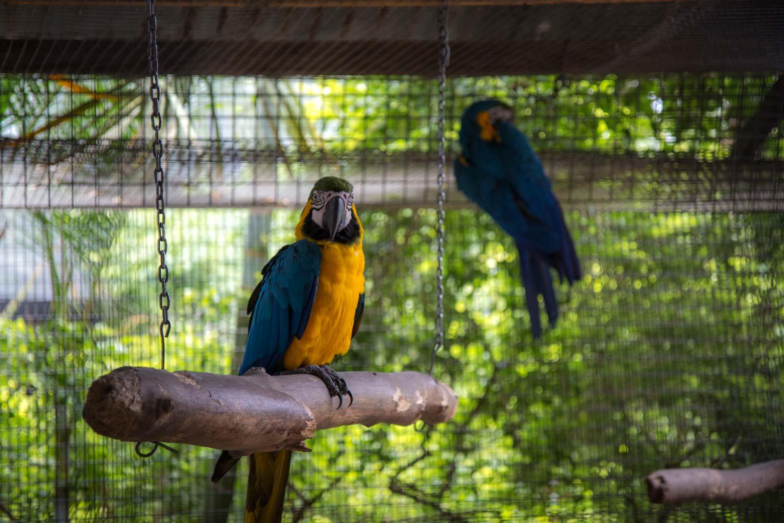 Flying High Bird Sanctuary, Childers, Queensland, Australia