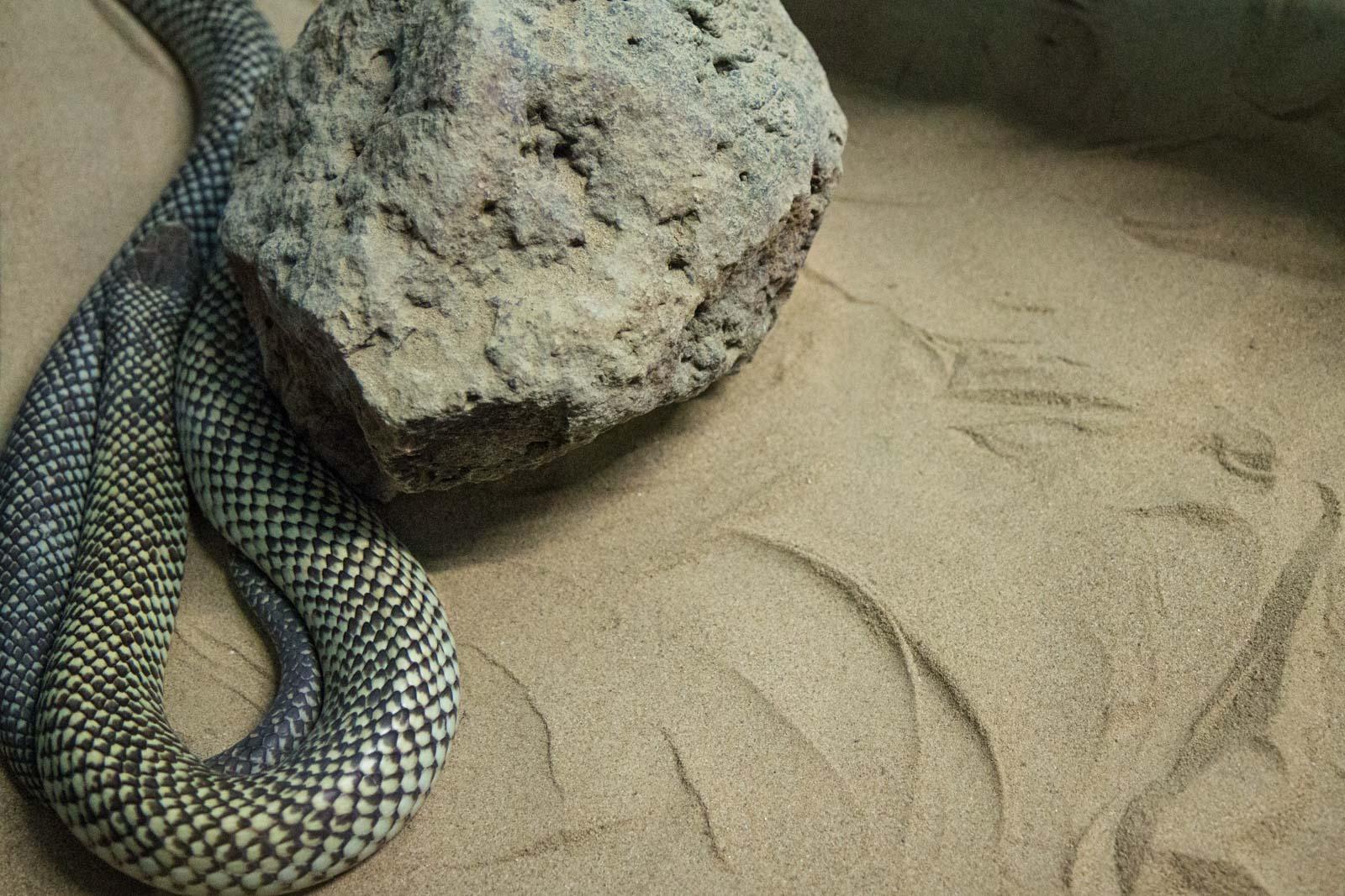 Snakes Downunder Reptile Park, Childers, Queensland, Australia