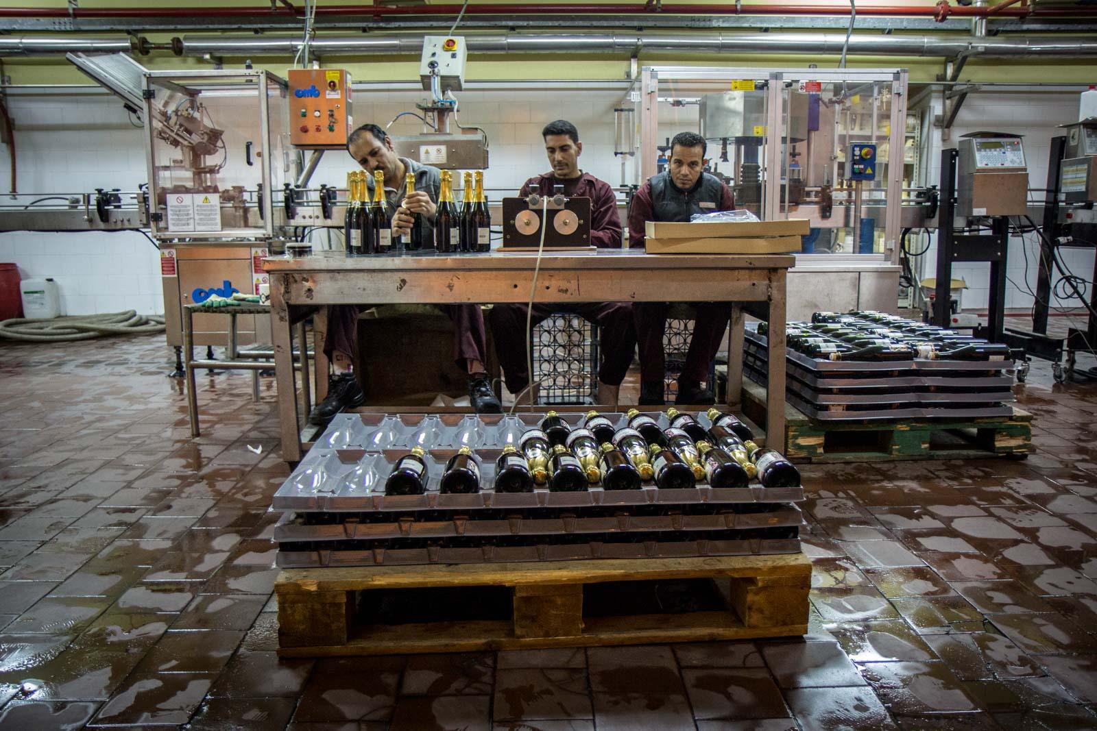 El Gouna winery, winemaking in Egypt