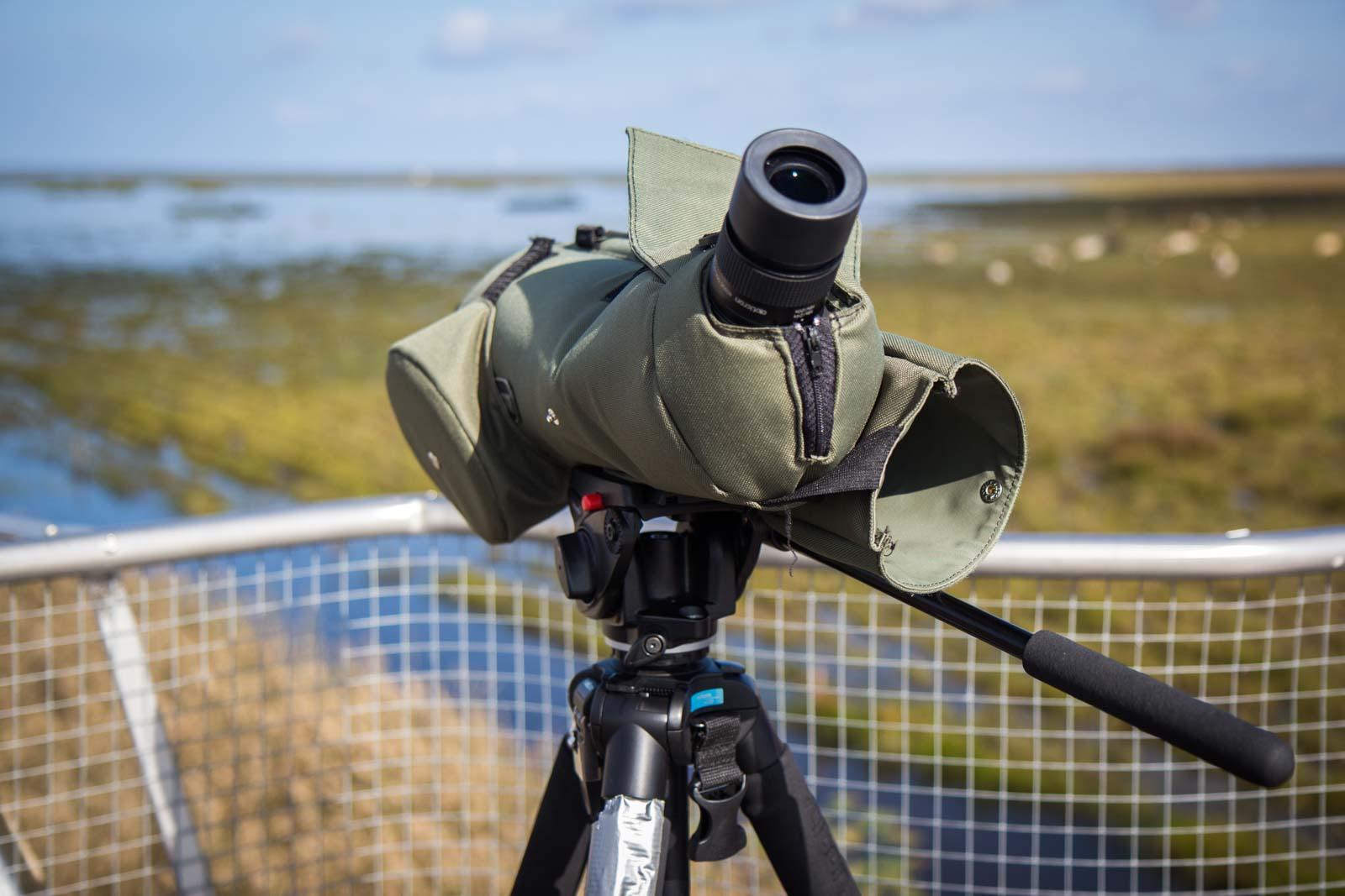 Liminka Bay wildlife photography tour, Finland