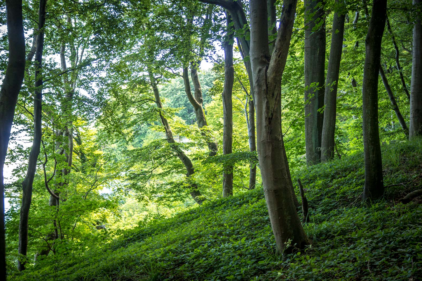 Jasmund National Park, Ancient Beech Forests of Germany