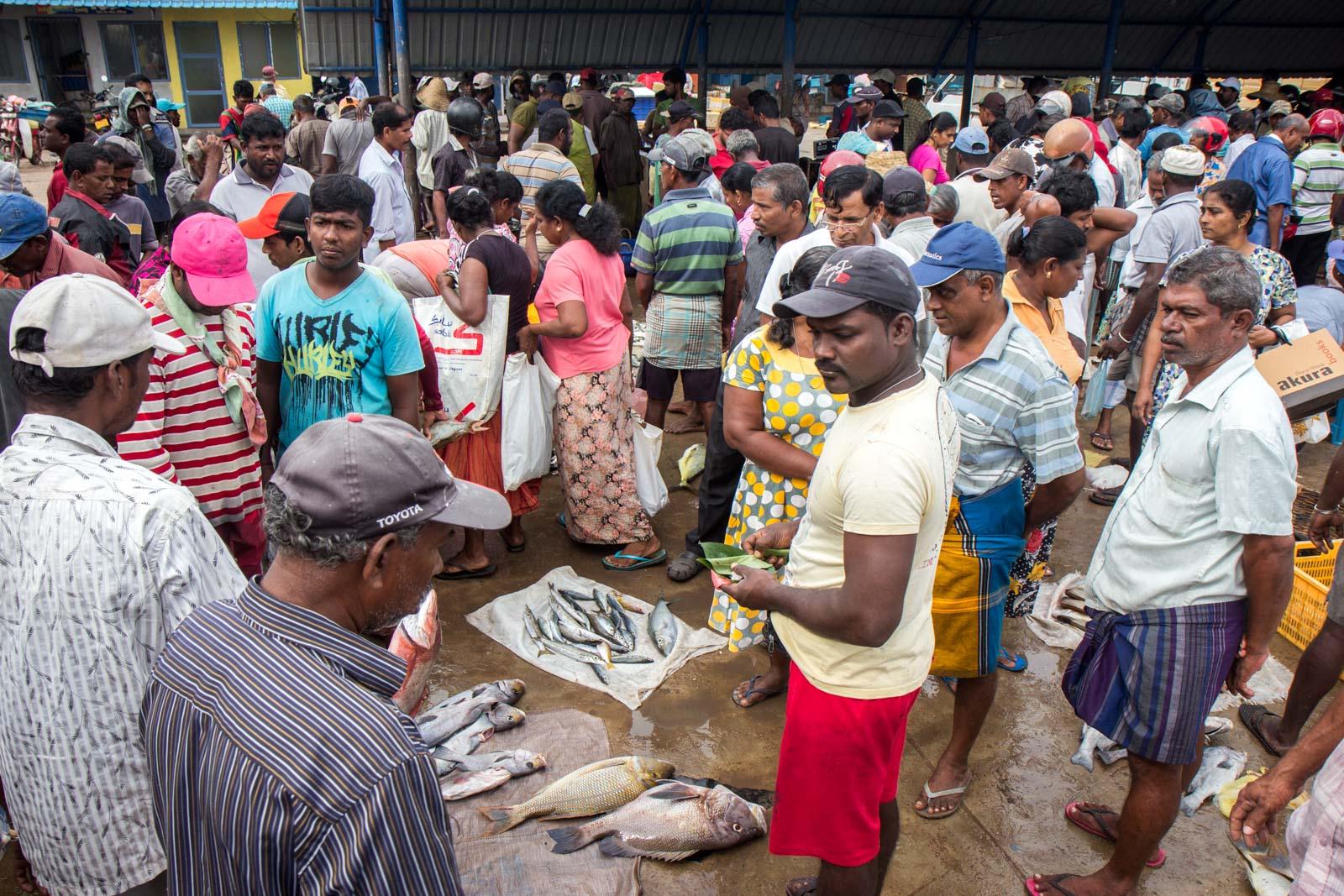 Negombo Fish Market, Sri Lanka