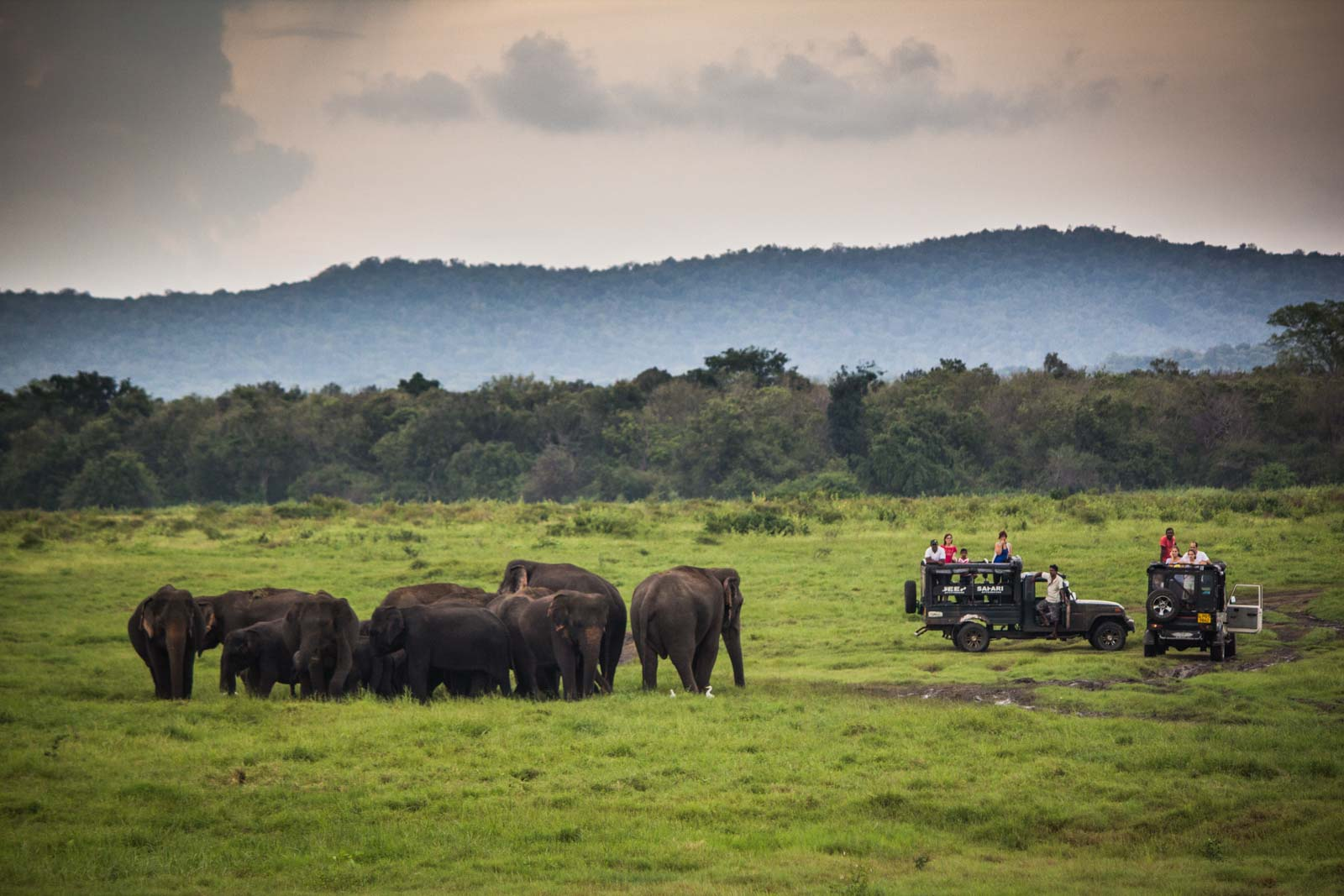 The Gathering, elephants, Kaudulla National Park, Sri Lanka