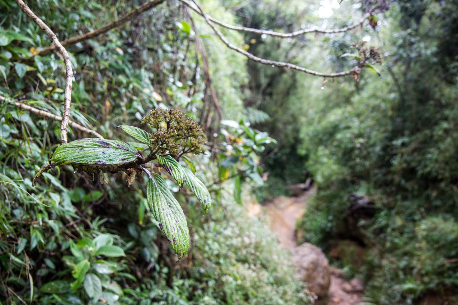 Horton Plains National Park, Sri Lanka