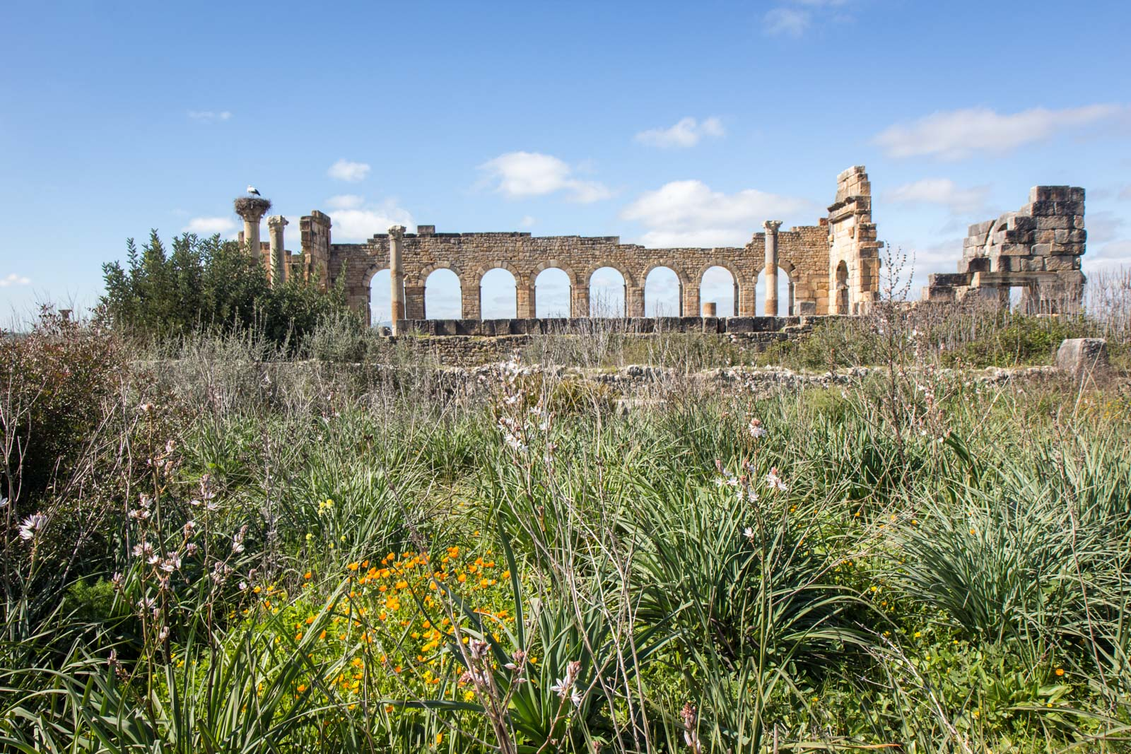 Archaeological Site of Volubilis, Morocco