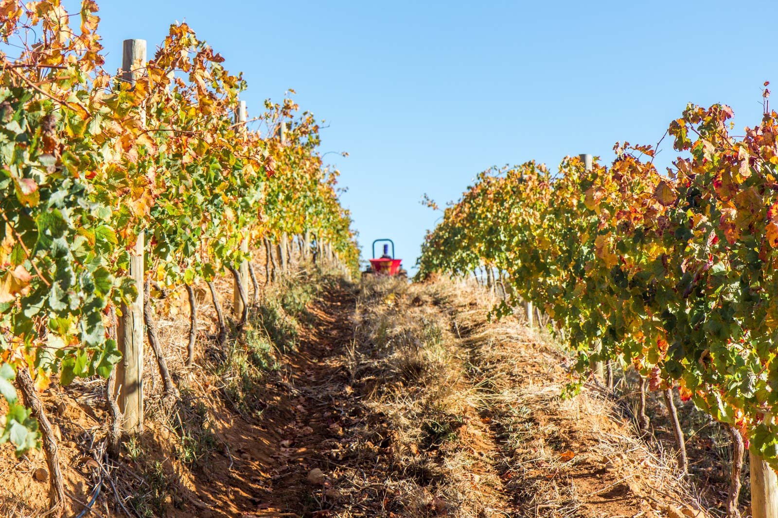 Chenin blanc wines, Stellenbosch, South Africa