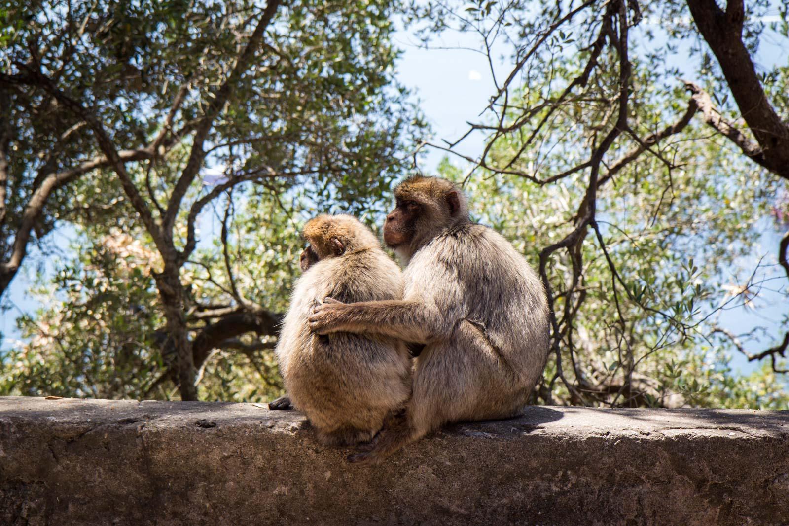 Apes' Den, Rock of Gibraltar