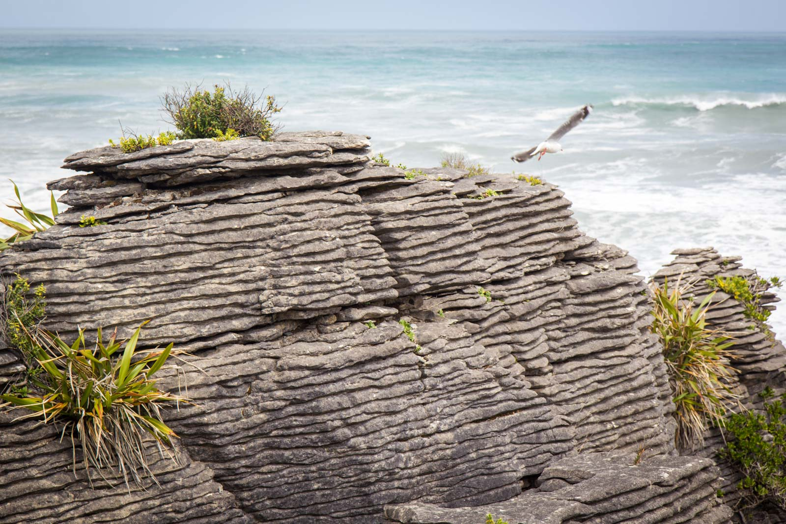 Pancake Rocks Nz South Island
