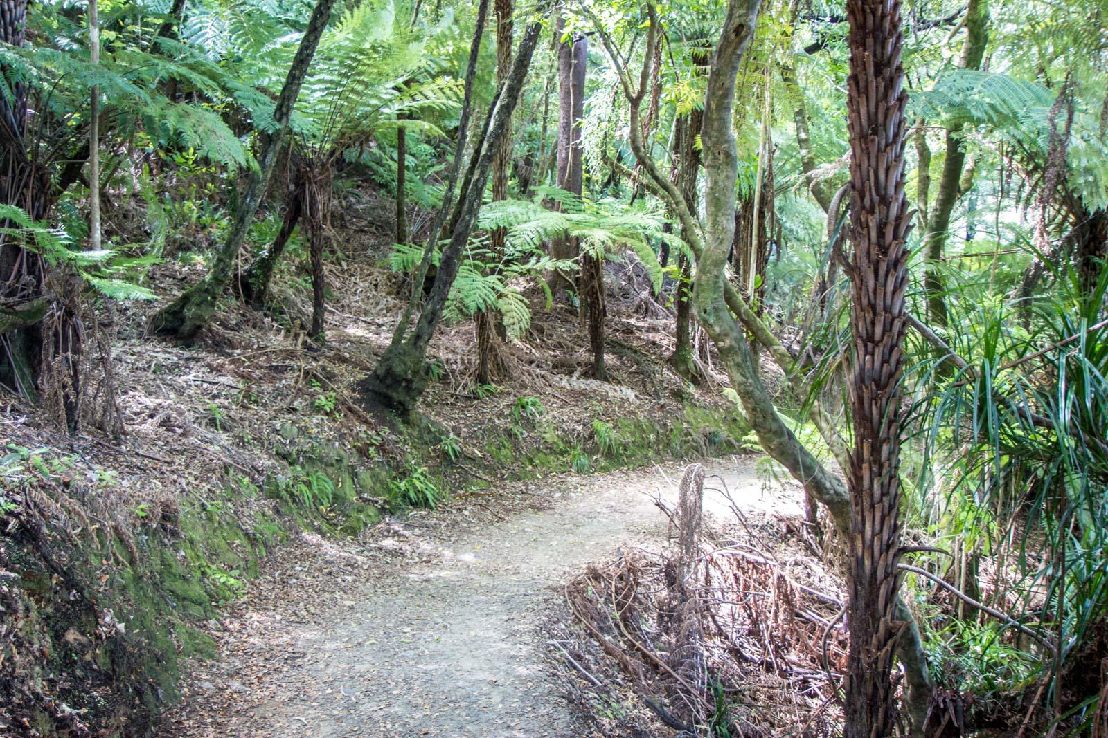 Start of Queen Charlotte Track, New Zealand