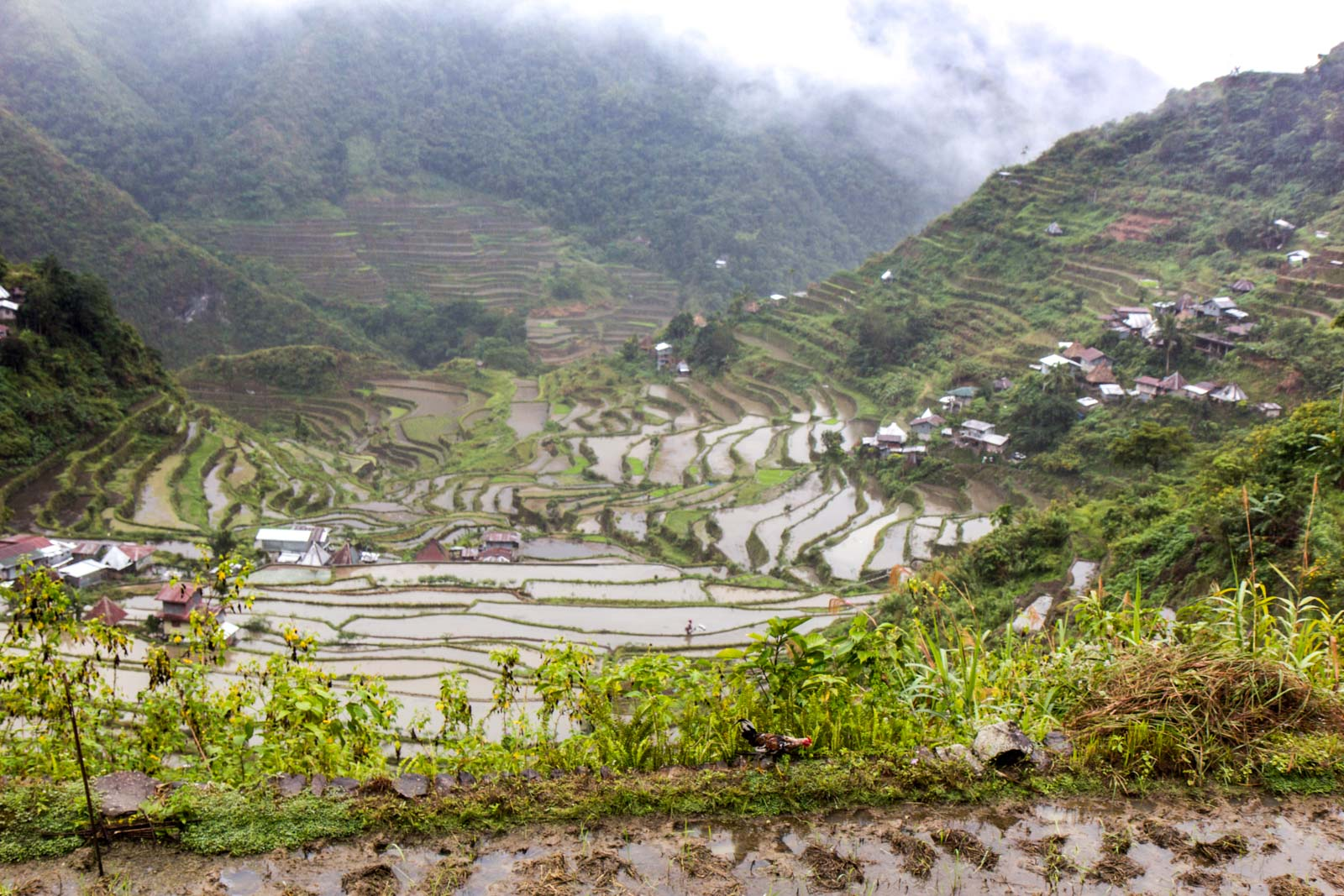 Batad Rice Terraces, Banaue, The Philippines