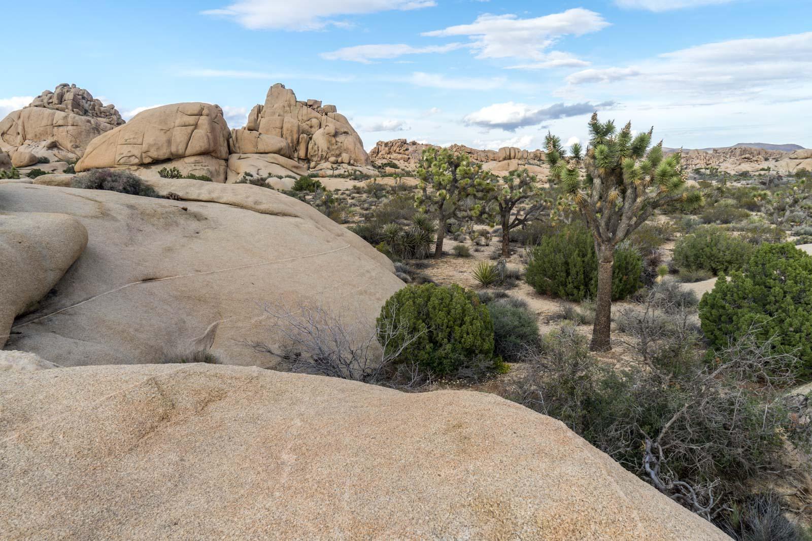 Jumbo Rocks, Joshua Tree National Park, California, USA