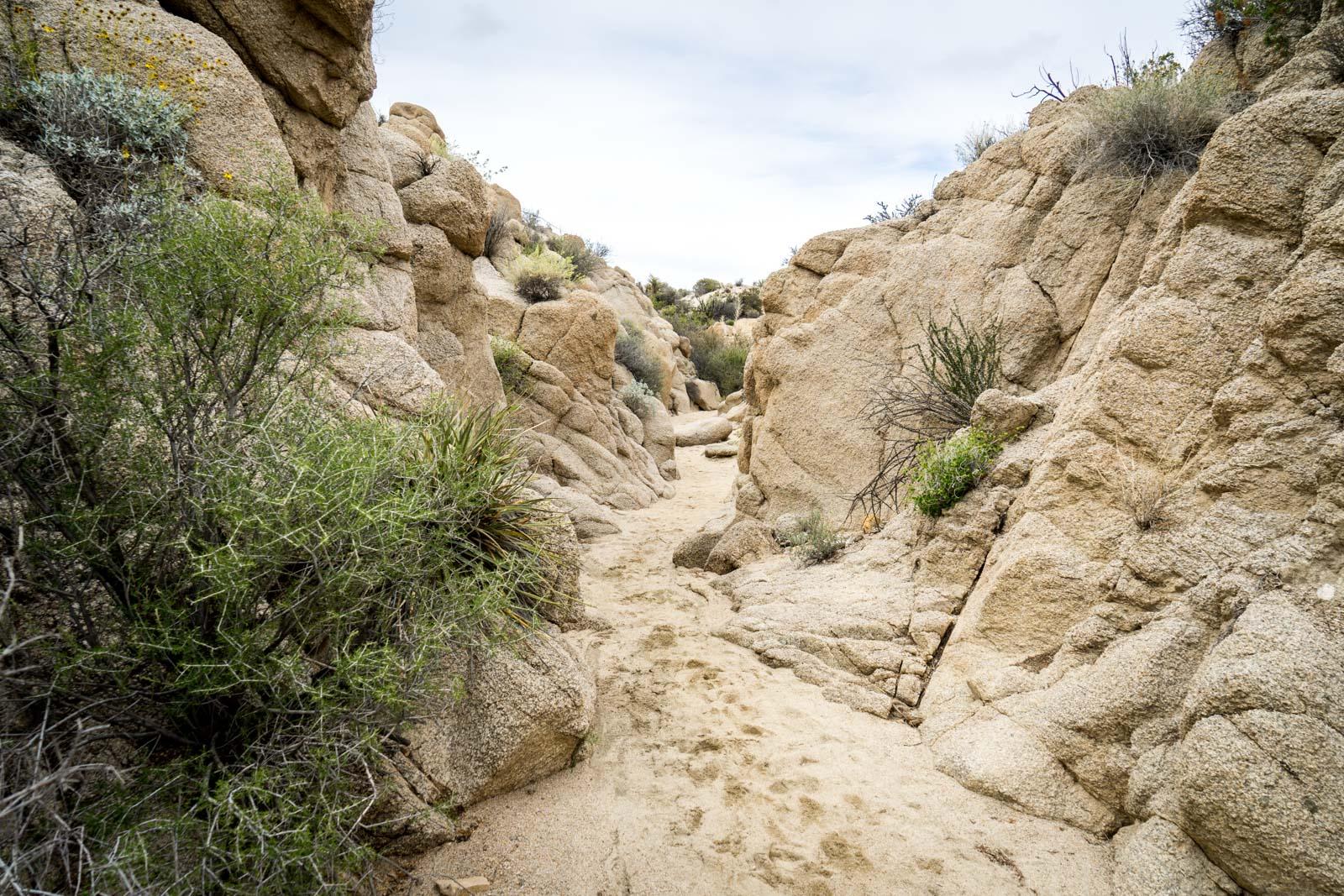 Lost Palms Oasis, Joshua Tree National Park, California, USA