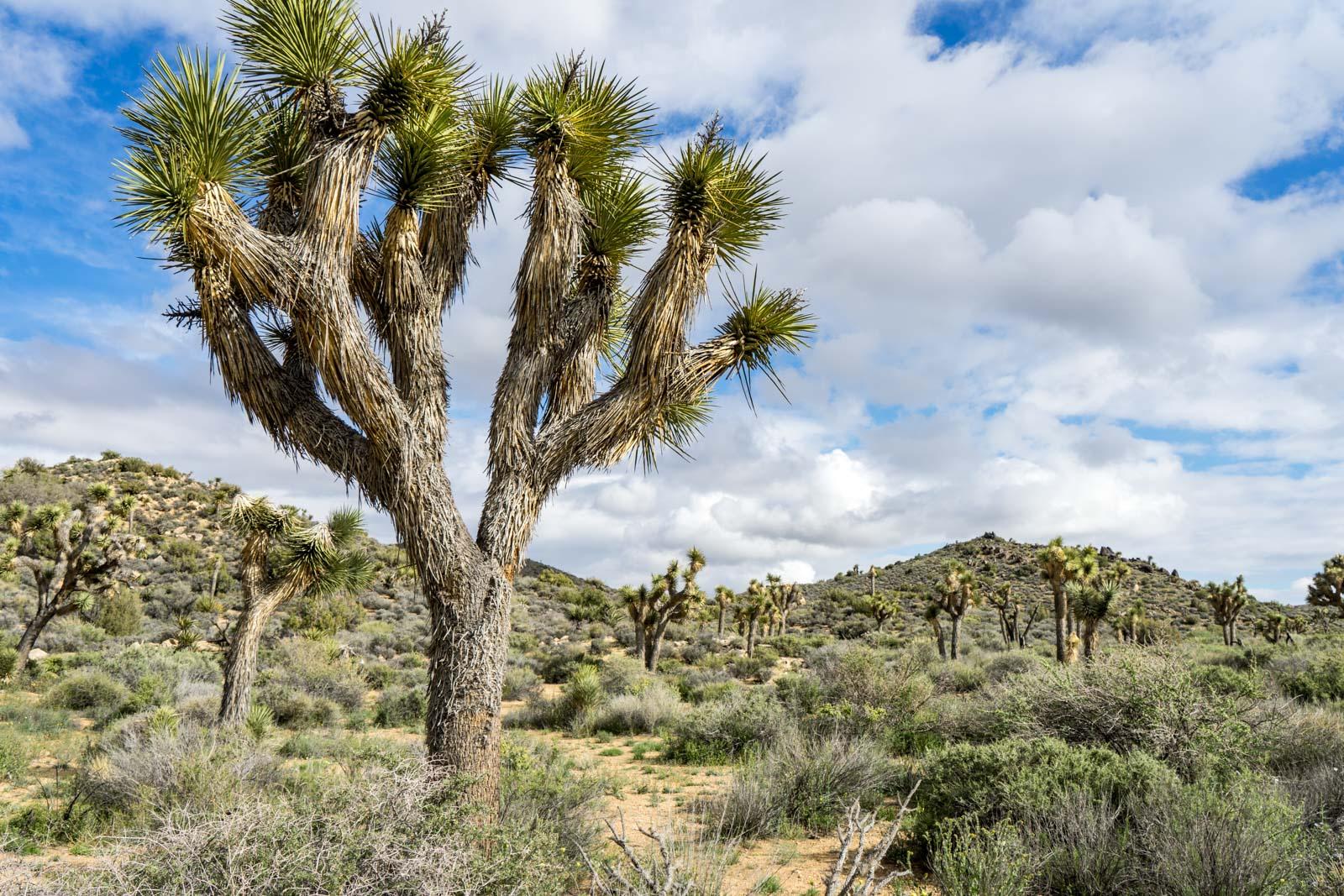 Lost Horse Mine hike, Joshua Tree National Park, California, USA