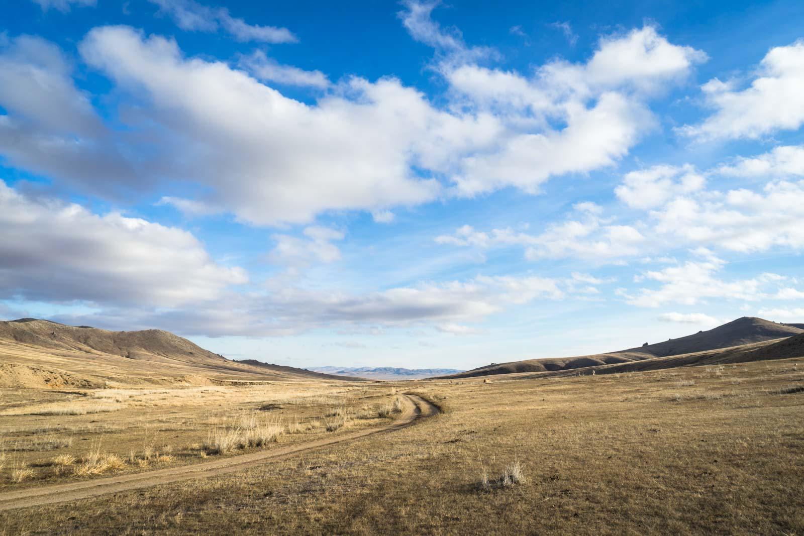 Przewalksi's Horses, Hustai National Park, Mongolia