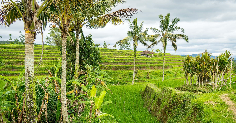 Visiting Jatiluwih Rice Terraces and Balis Cultural Landscape