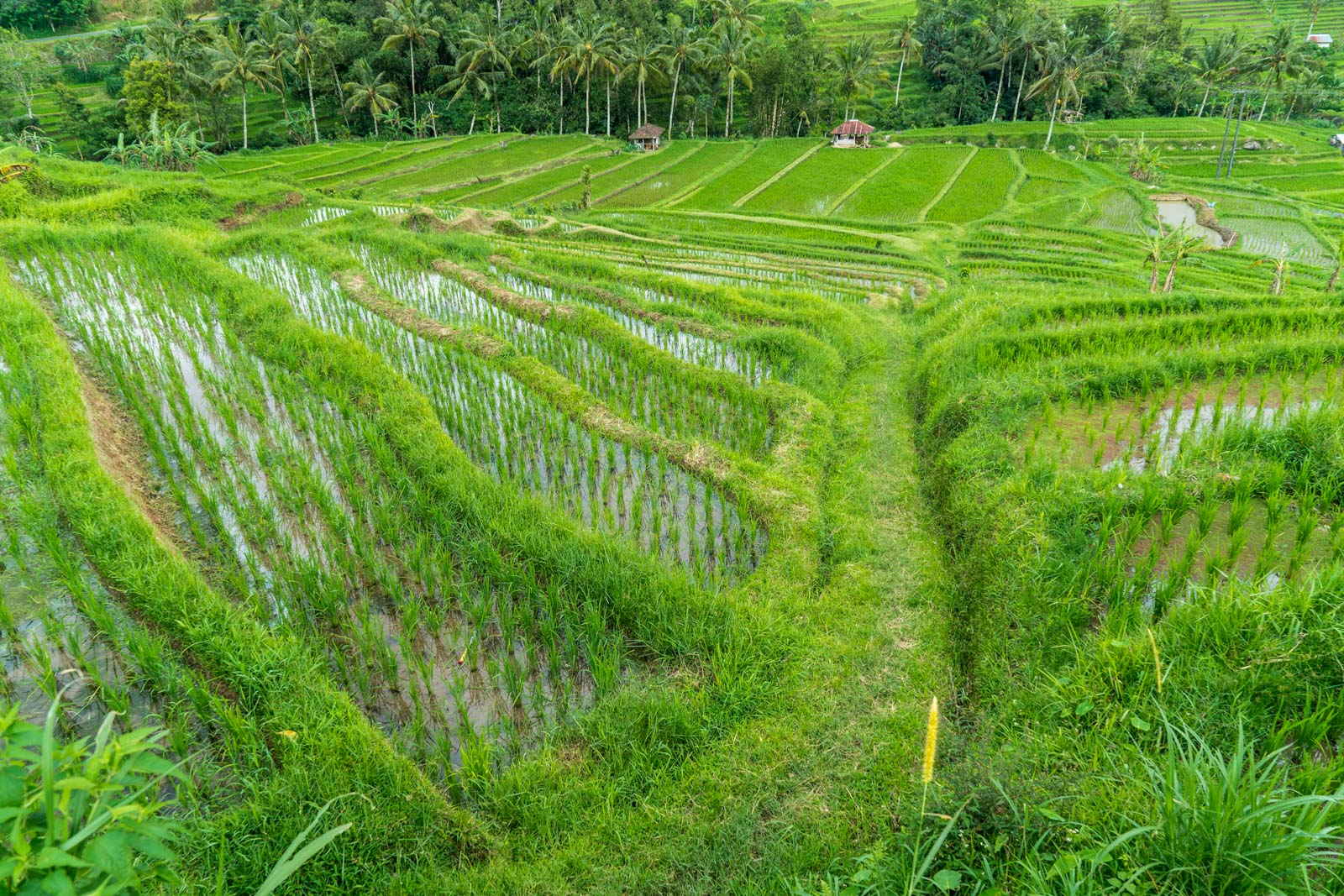 Visiting Jatiluwih Rice Terraces and Balis Cultural Landscape