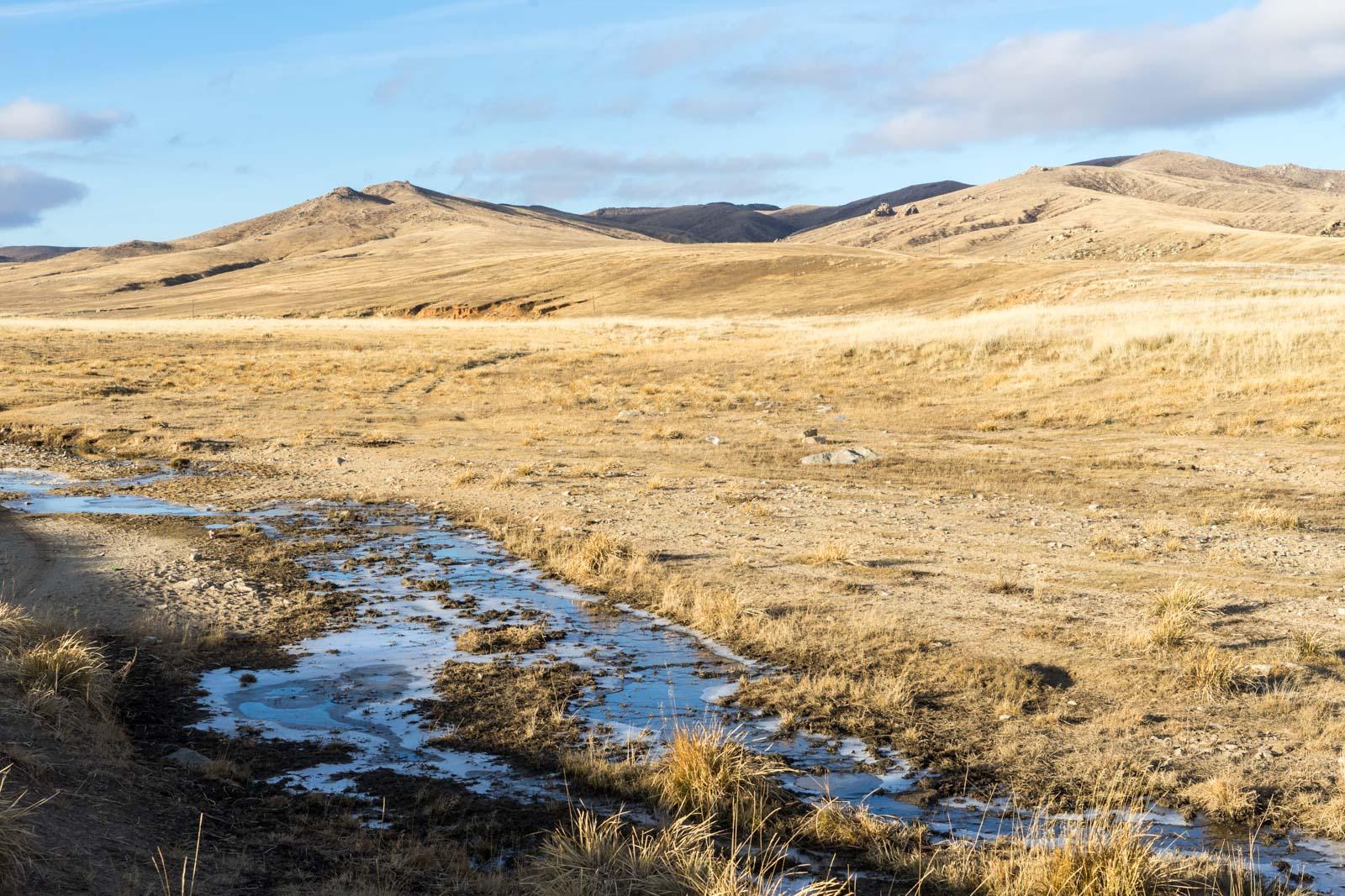 Dashpurev Tserendeleg, Hustai National Park, Mongolia