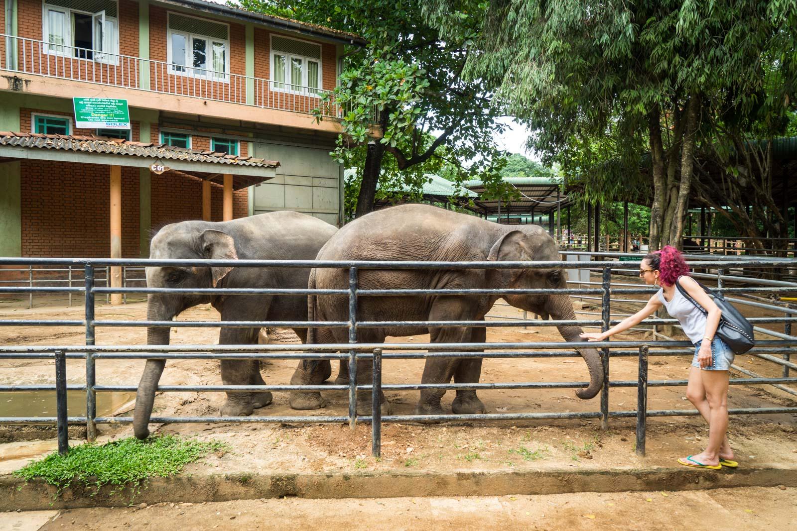 Addressing concerns about Pinnawala Elephant Orphanage, Sri Lanka