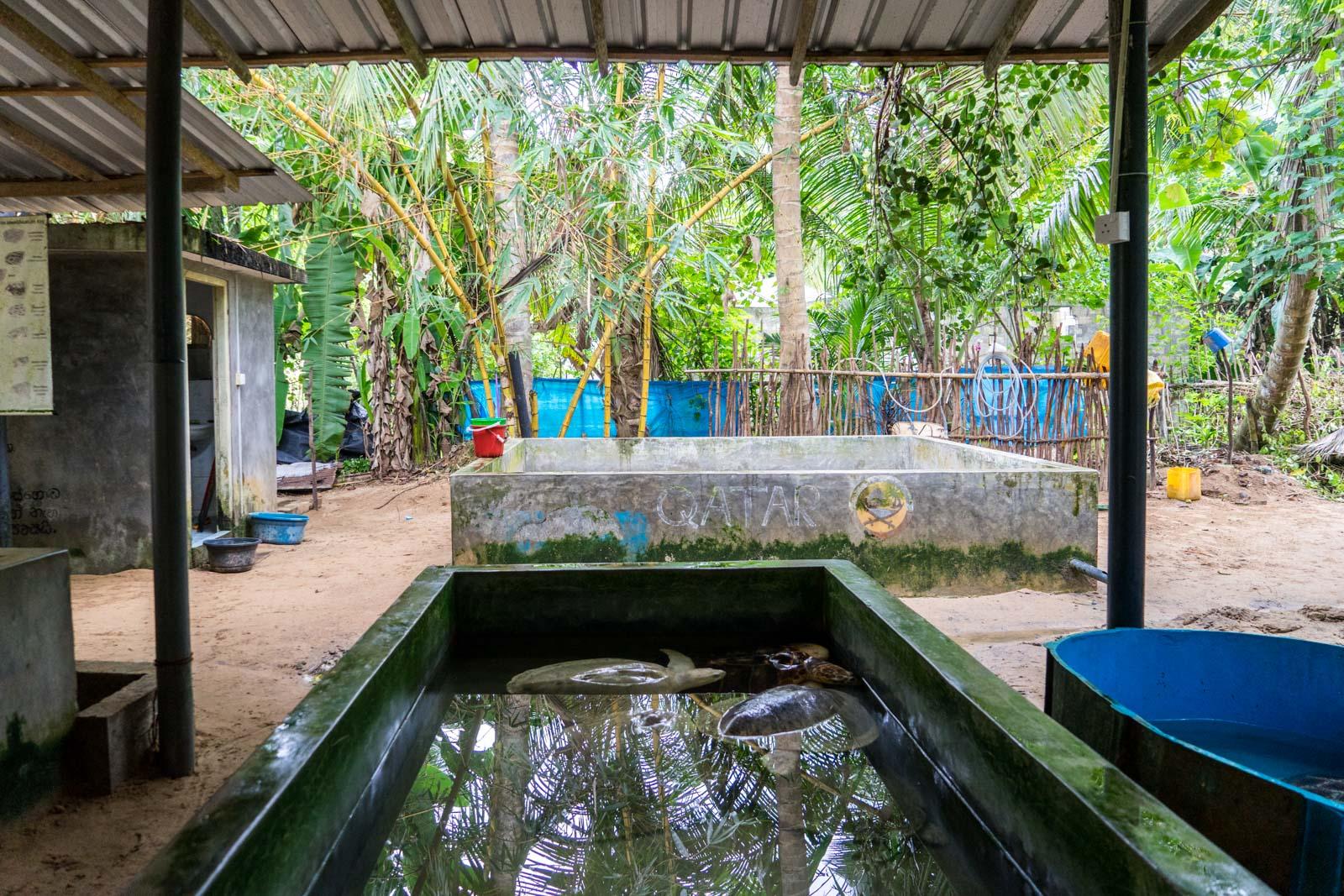 Kosgoda Turtle Hatchery, Galle, Sri Lanka