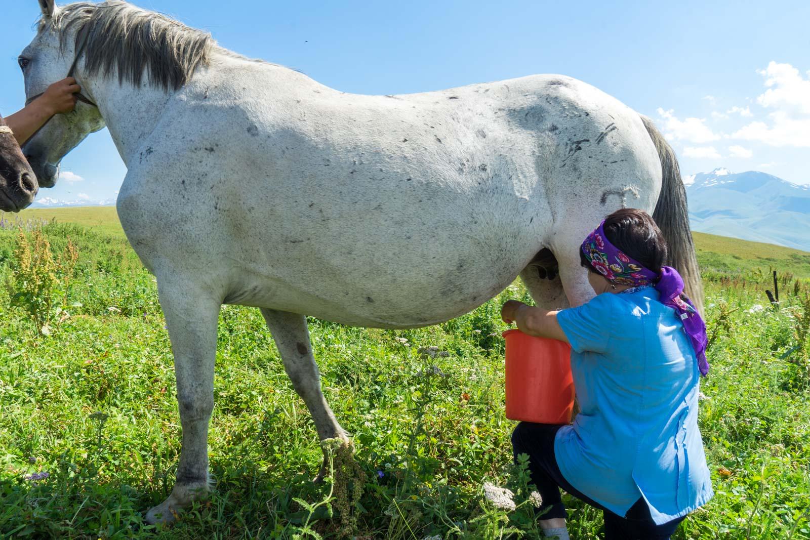 Drinking horse milk in Kyrgyzstan