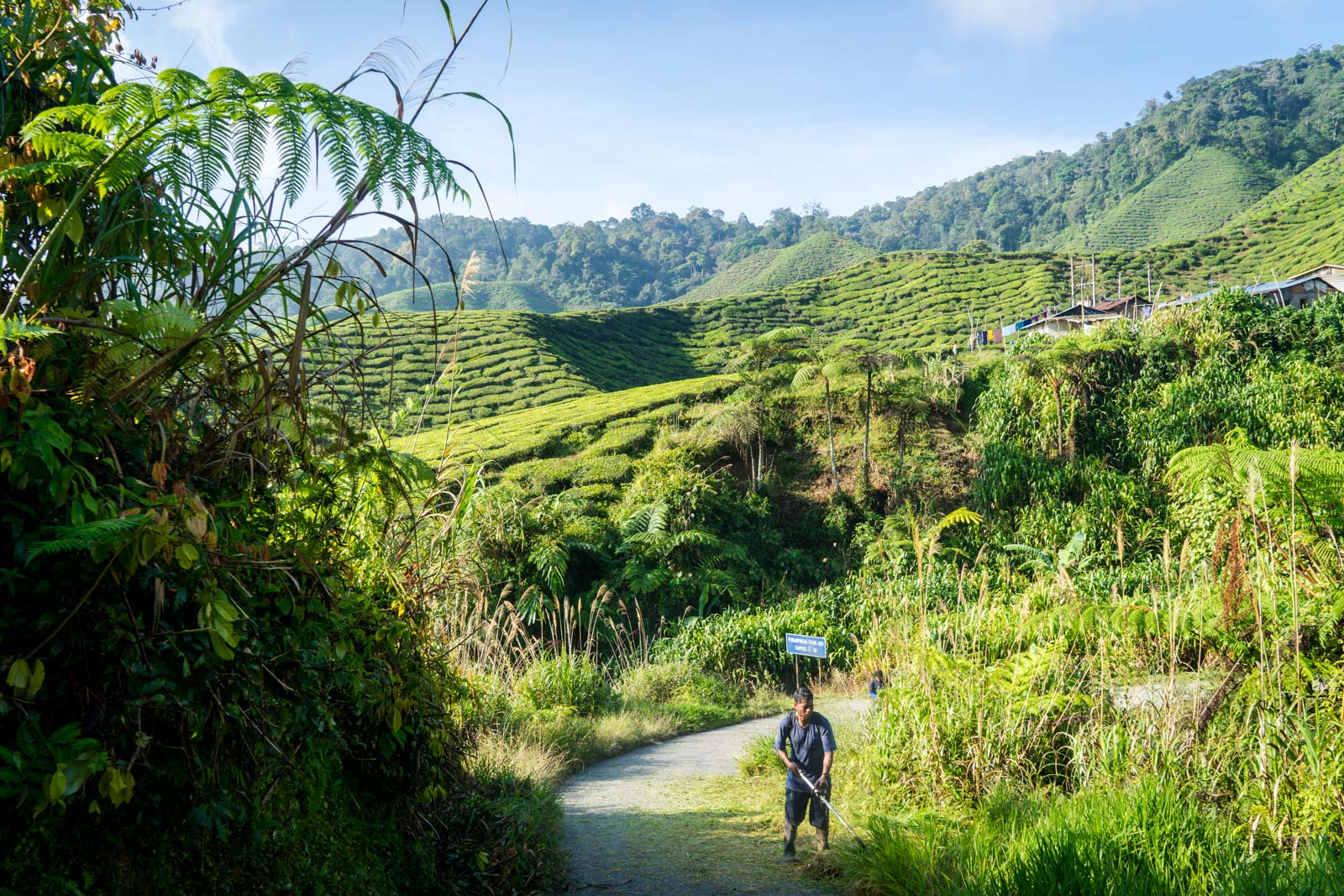 Cameron Highlands hiking, Malaysia