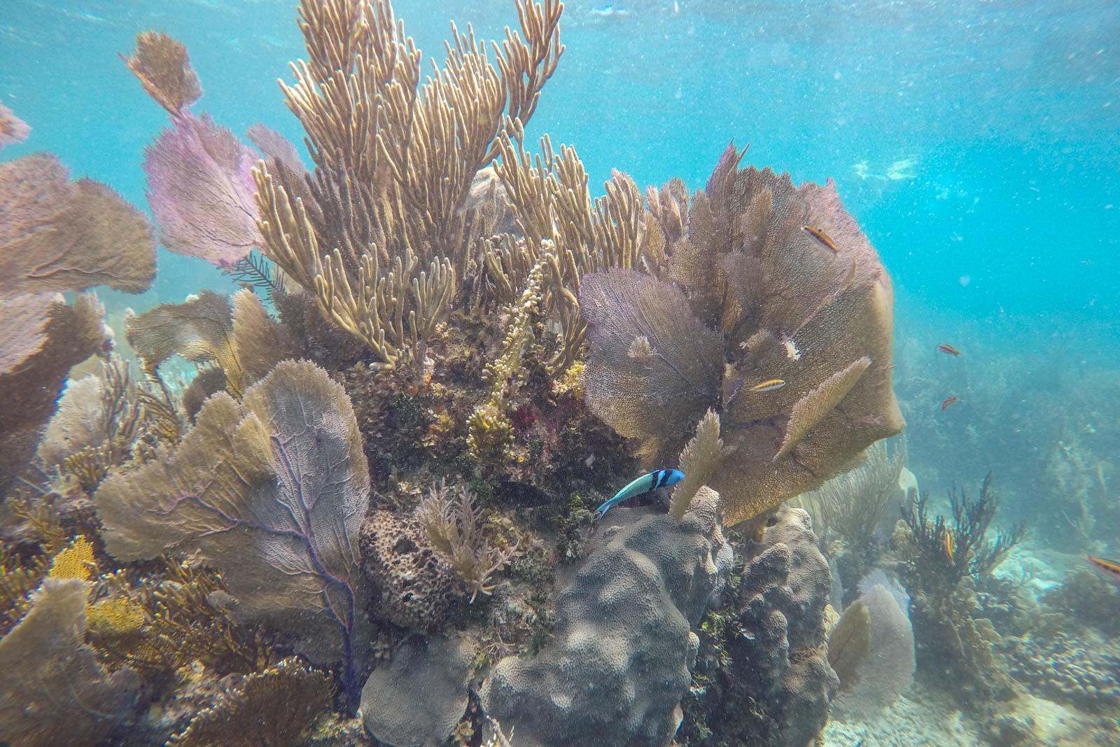 Snorkelling on Belize Barrier Reef