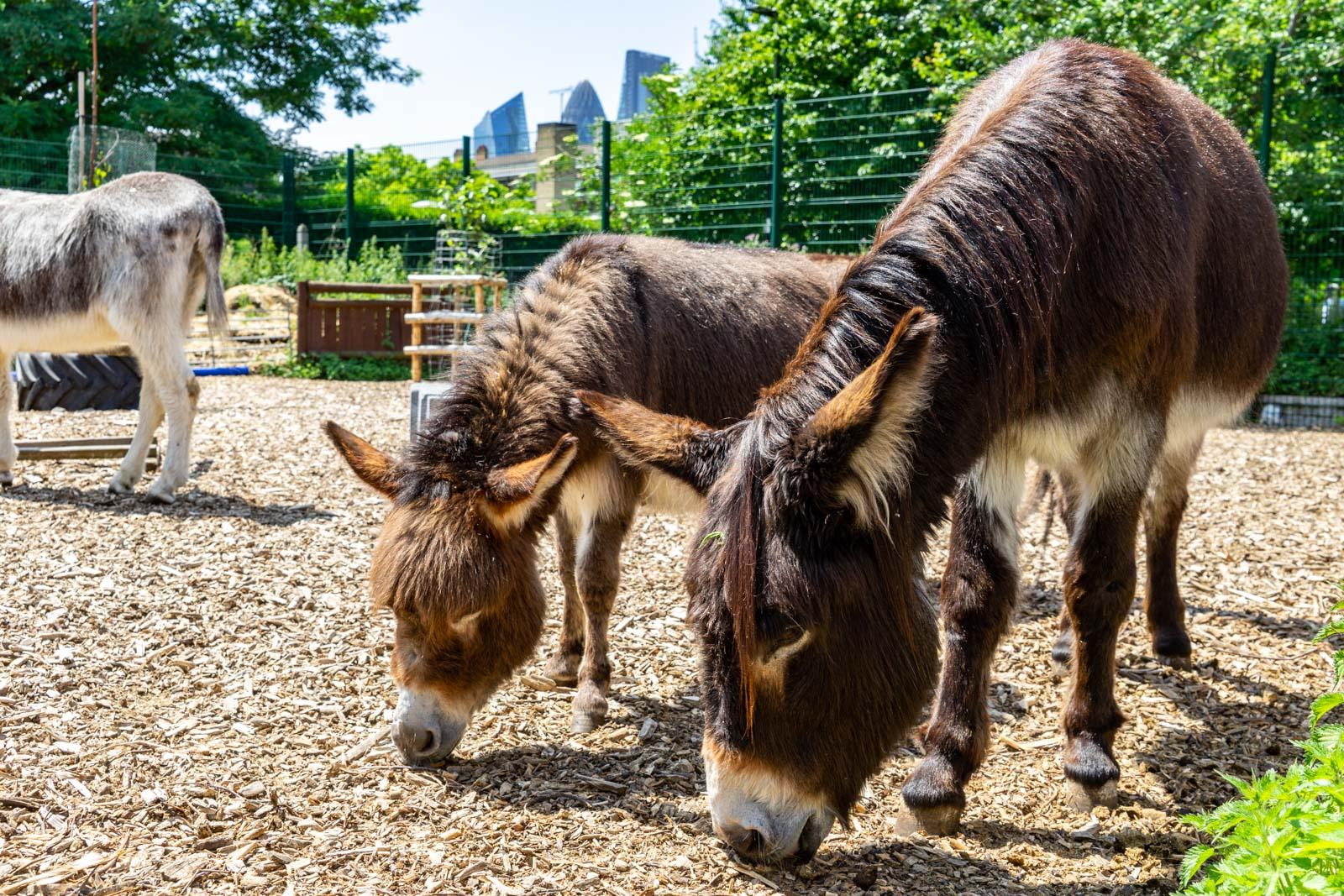 Spitalfields Farm
