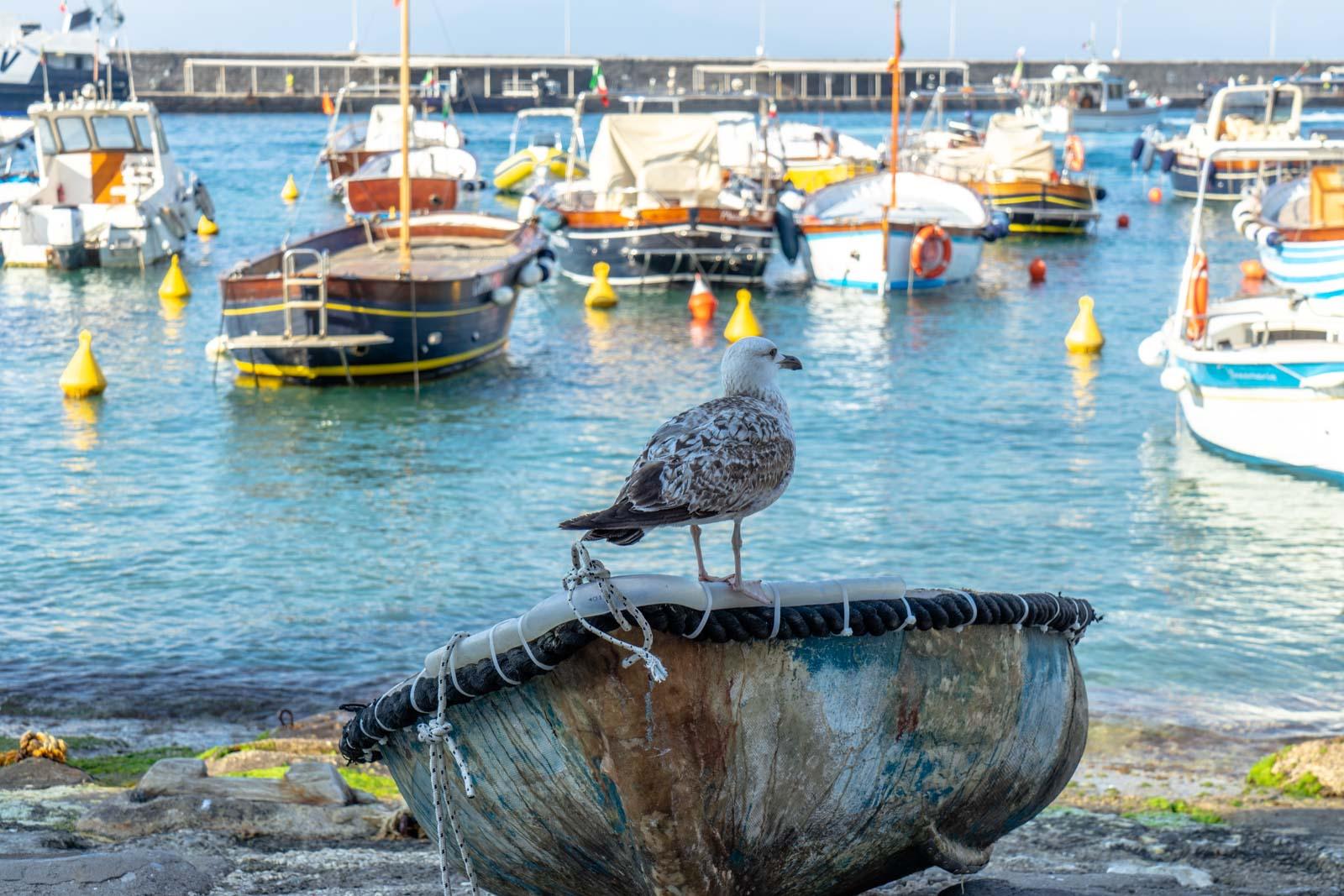 Day trip Capri, one day in Capri from Naples