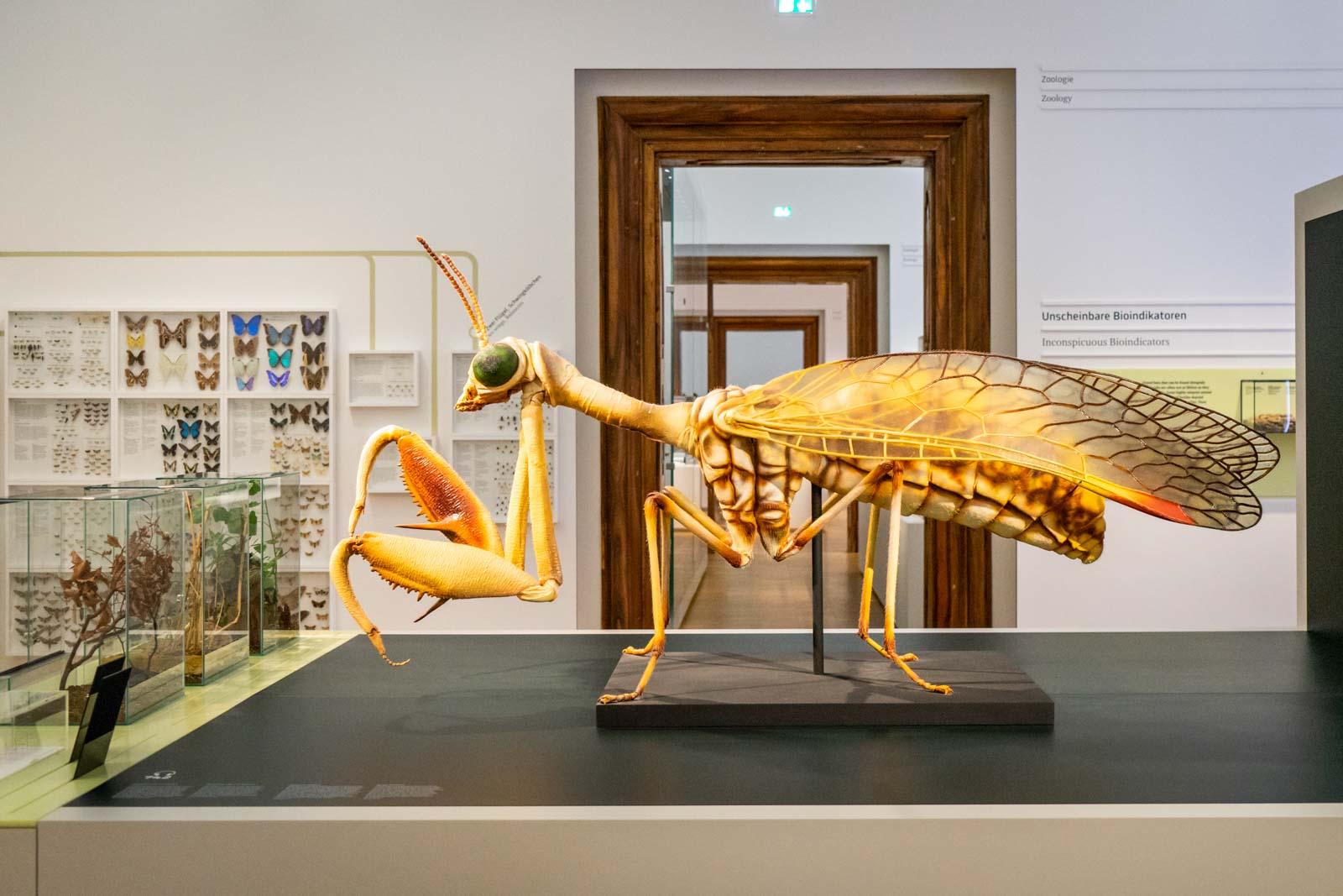 Natural History Museum, Graz, Austria