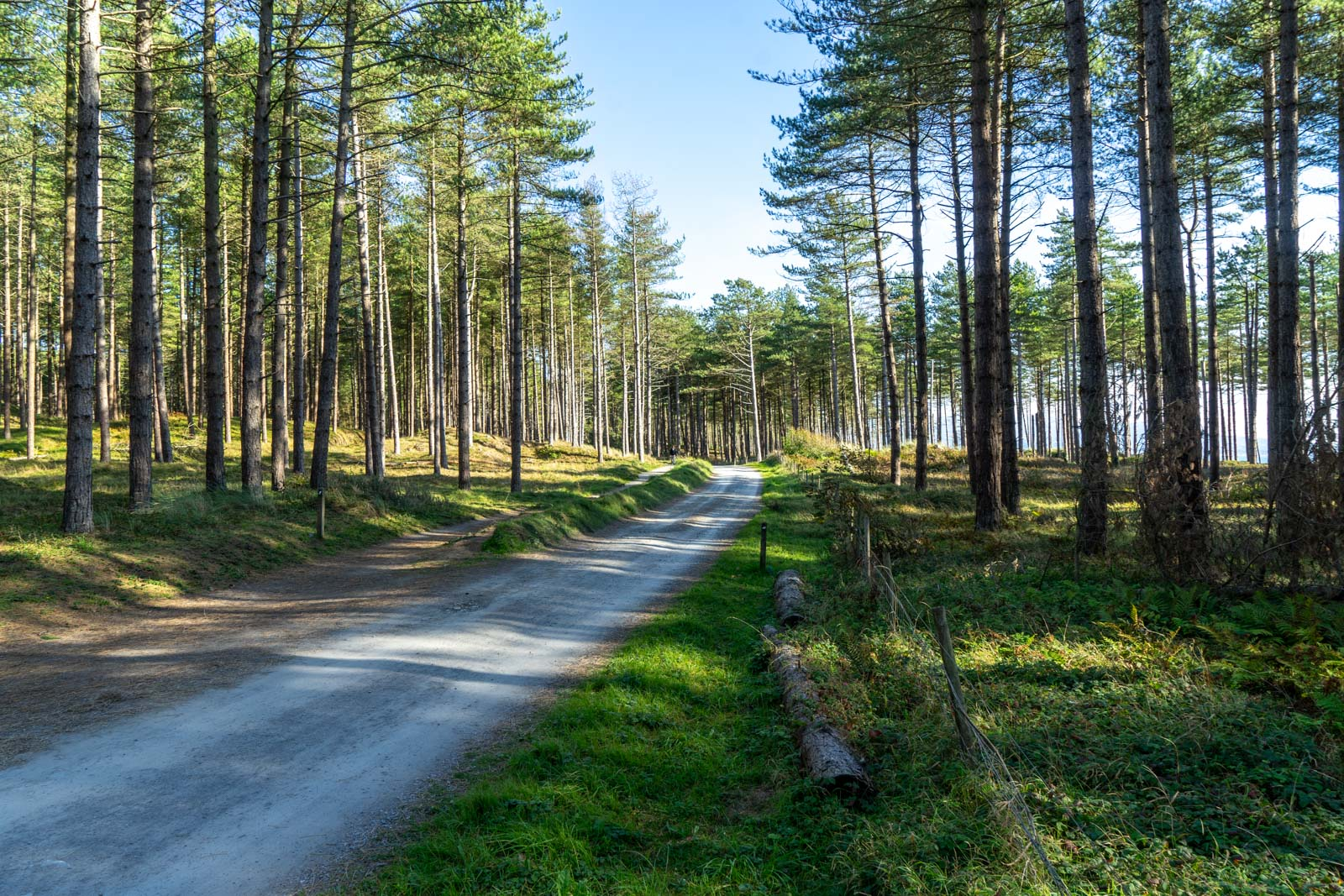 Newborough Forest in Wales