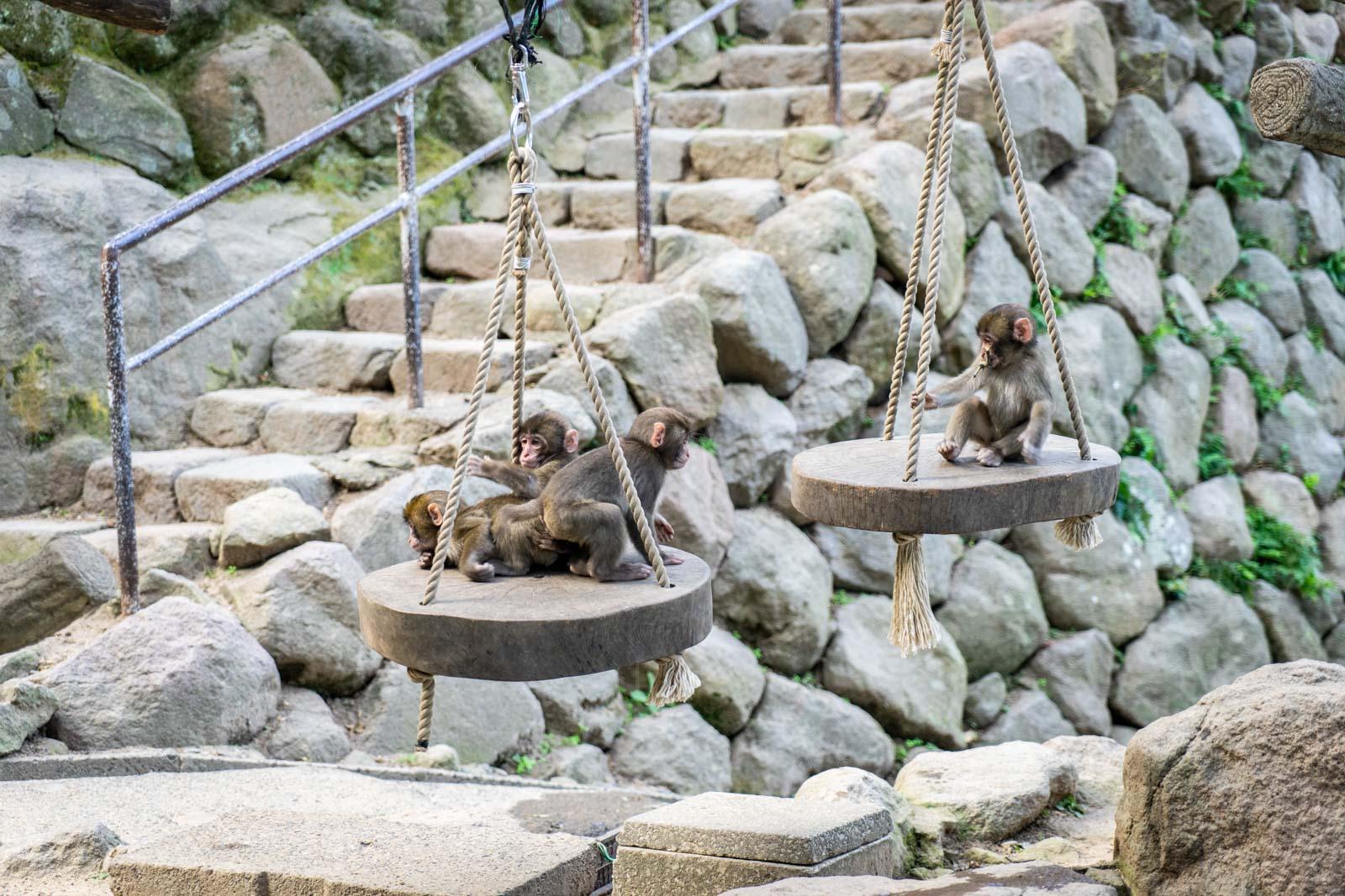 Takasakiyama Monkey Park, Oita, Japan