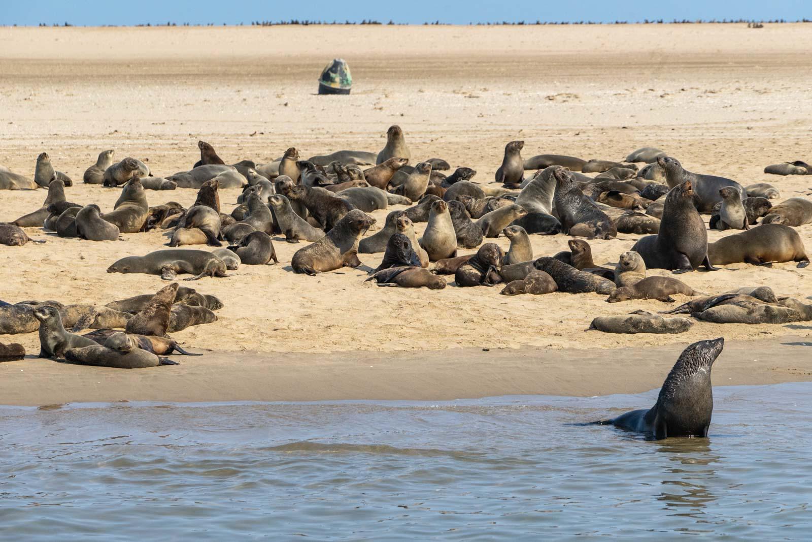 Walvis Bay boat cruise, Namibia