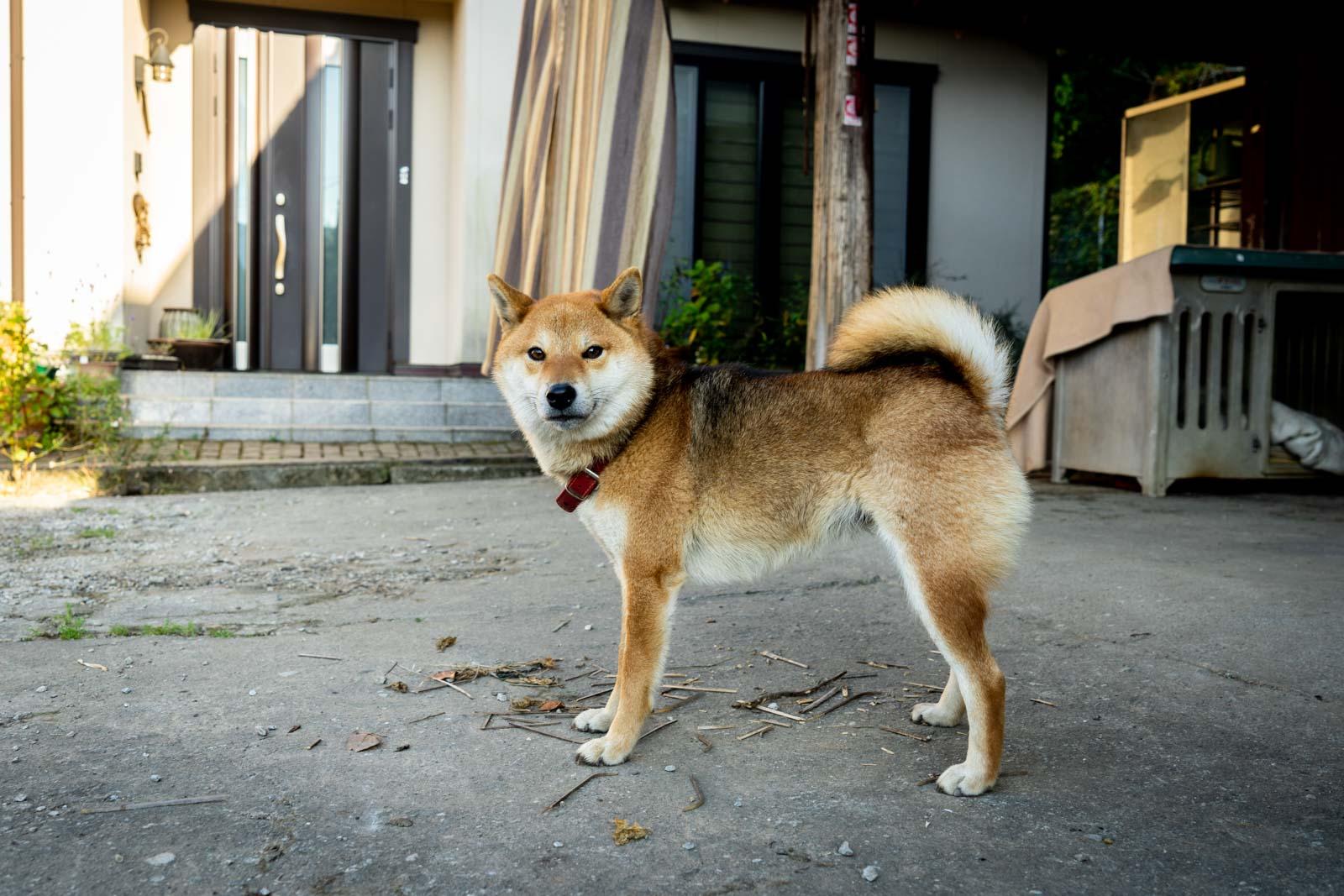 Homestay in Oita, Japan