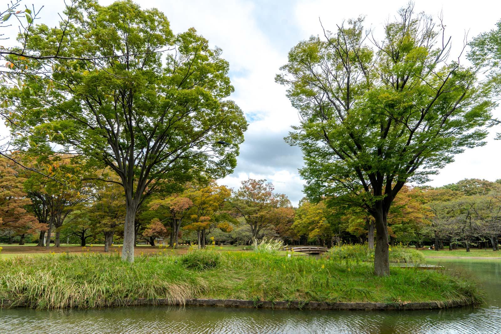 Yoyogi Park, Tokyo, Japan