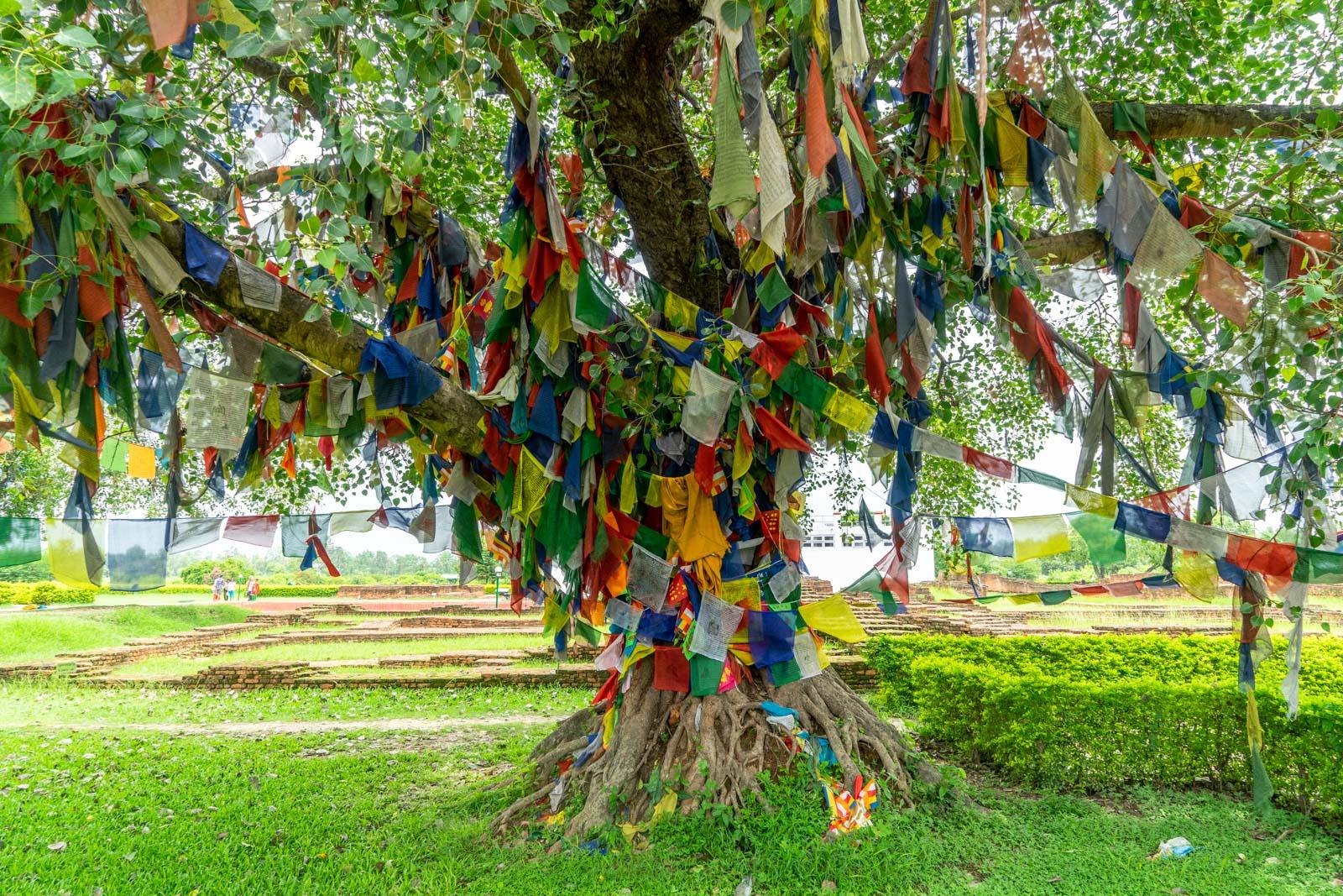 Sacred Garden, Lumbini, Nepal
